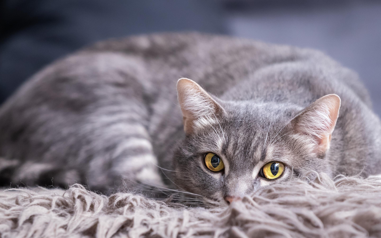 работы фото серой кошки с желтыми глазами подборка фото граффити