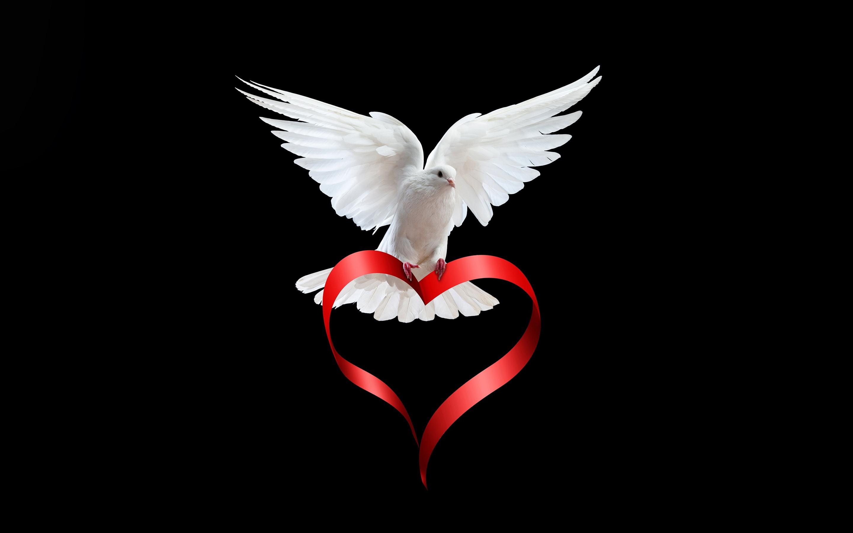 White dove love heart ribbon black