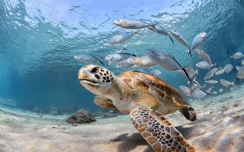 картинка моря и морских обитателей тихий