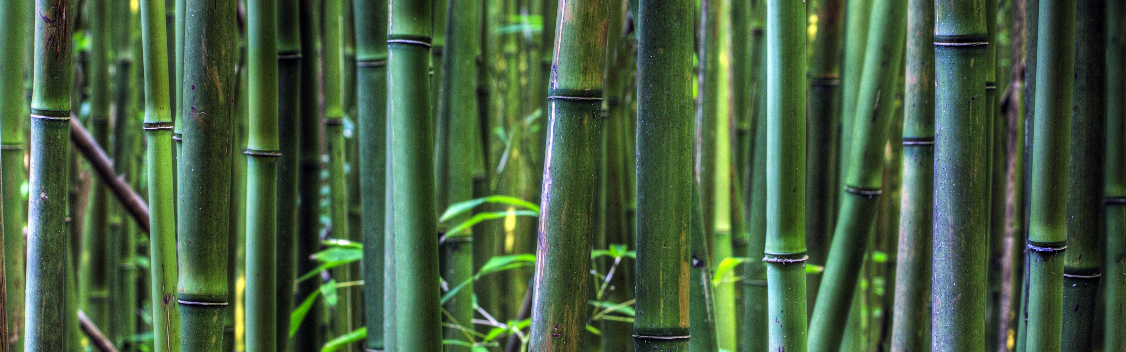Bambuswald Maui Hawaii Usa 3840x1200 Multi Monitor Panorama