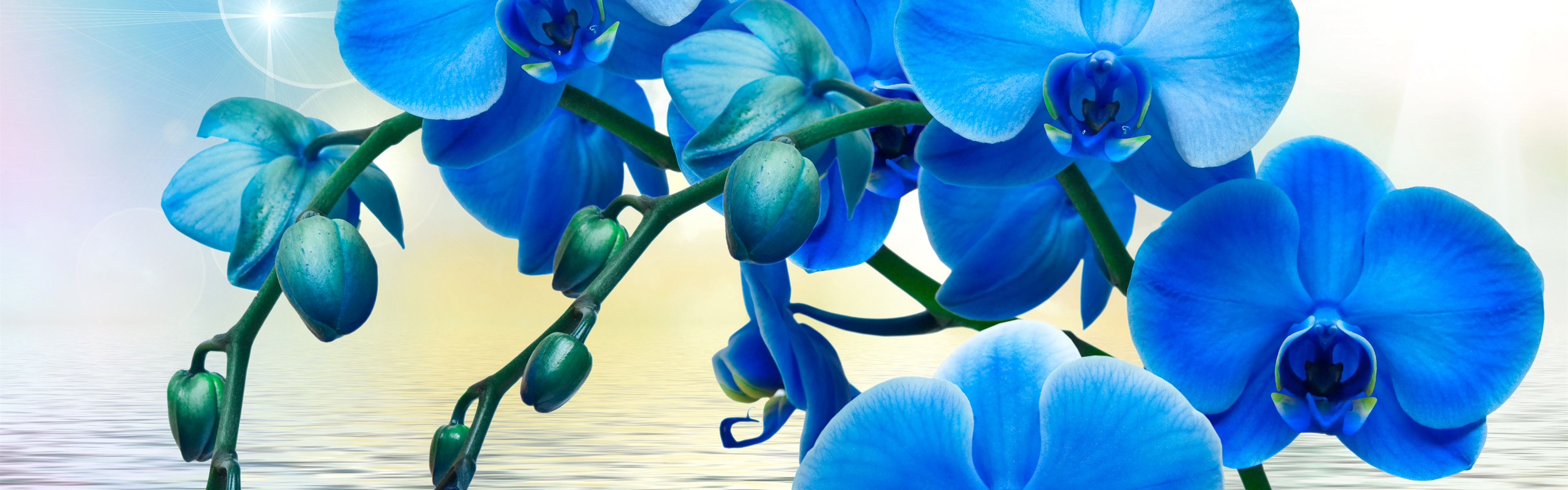 Pictures of blue orchids flowers
