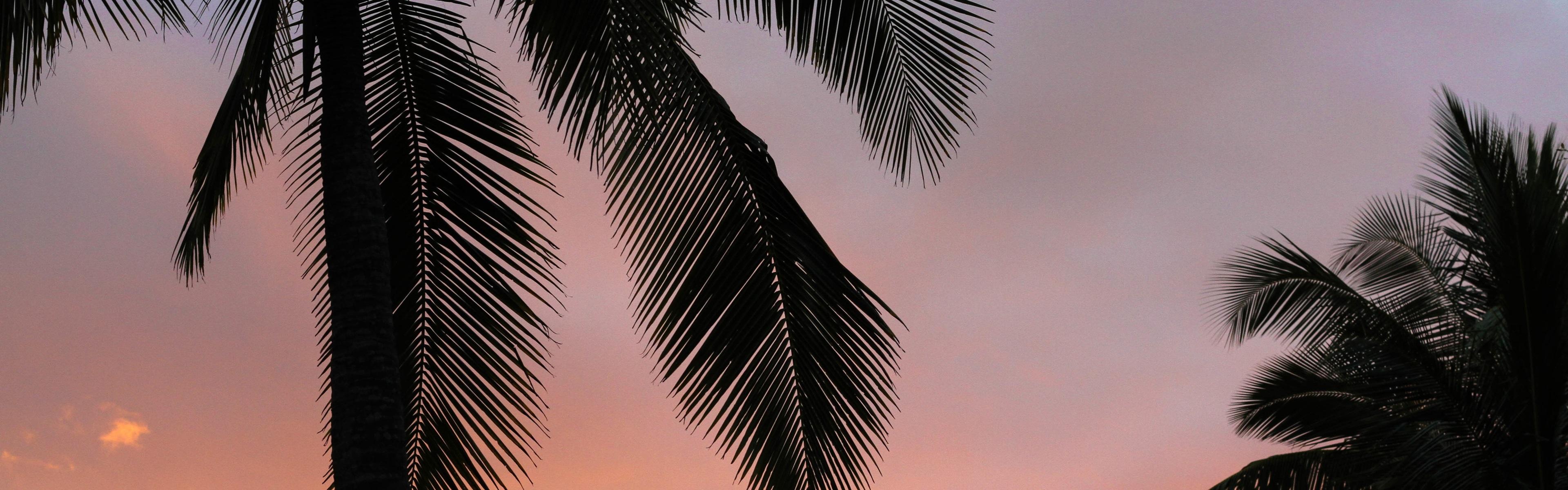 длинные картинки пальмы бокалу вина днем