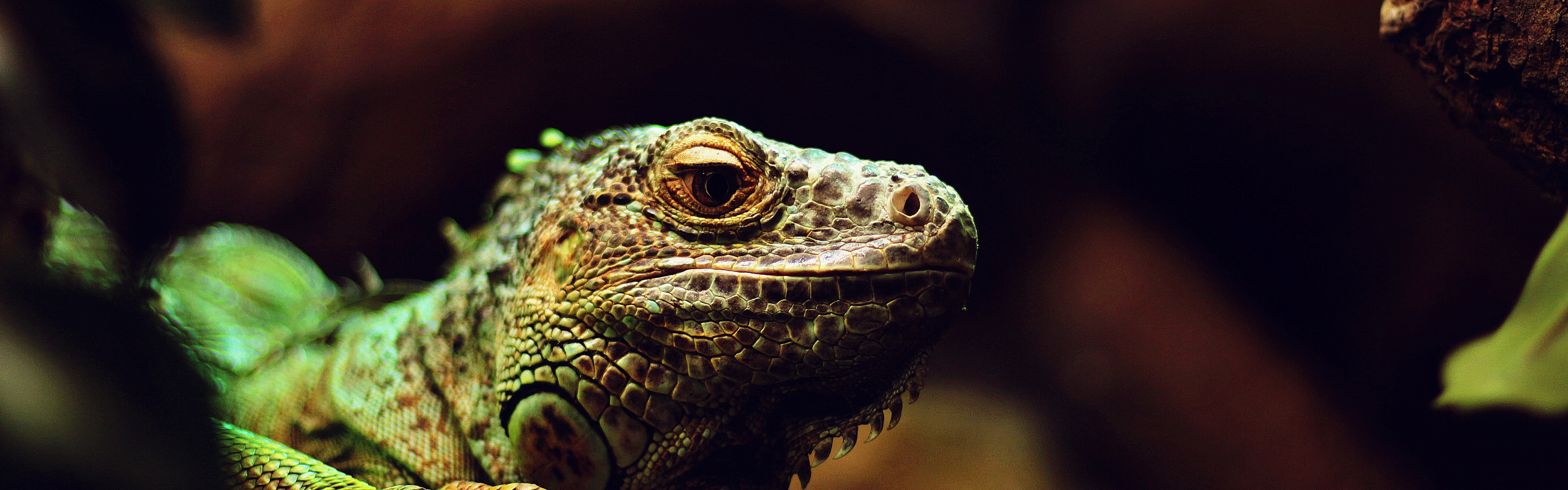 Lizard Reptile Macro Photography Wallpaper 3840x1200