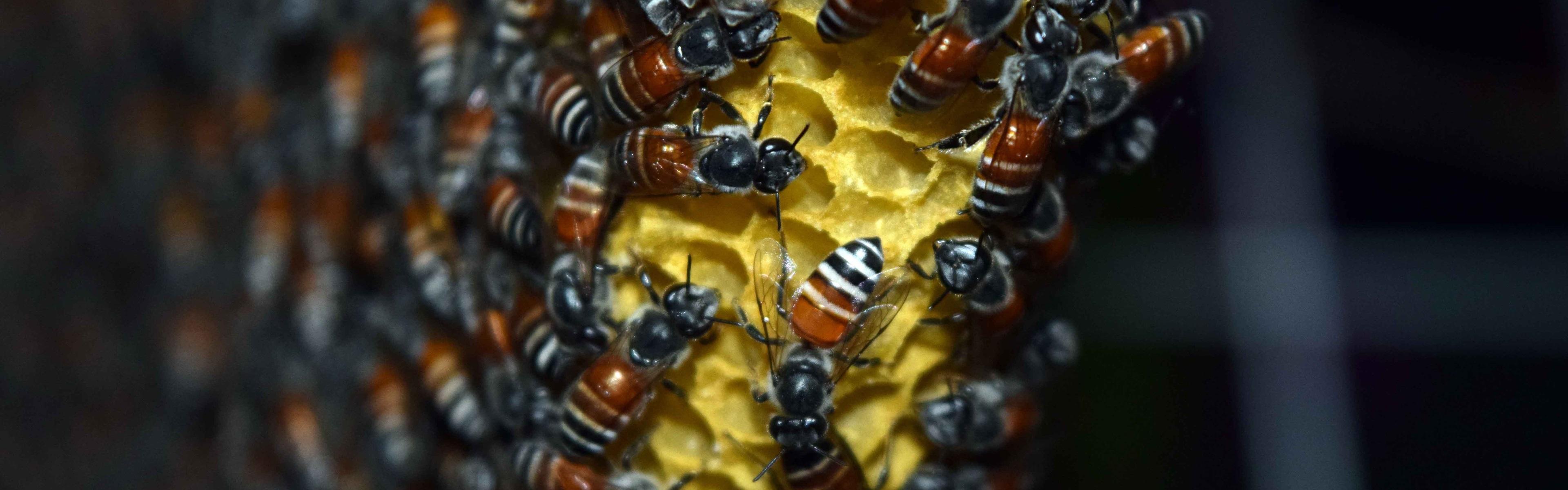 Мёд в сотах  № 604525 загрузить