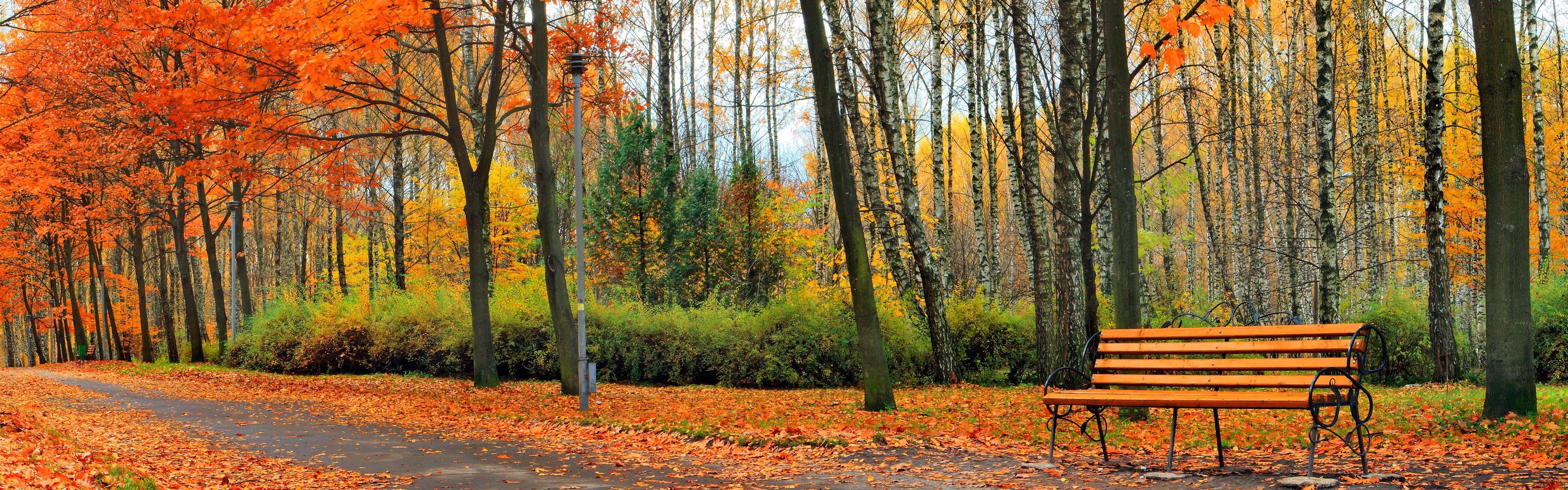 панорамная картинка осень смерть