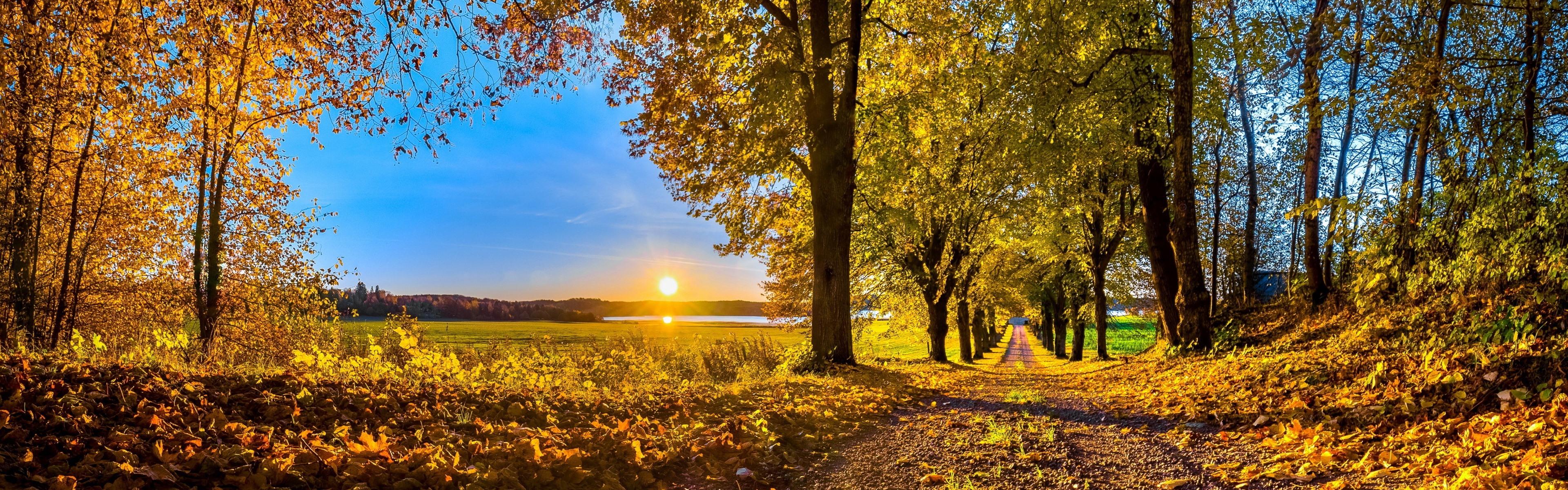 панорамная картинка осень белок