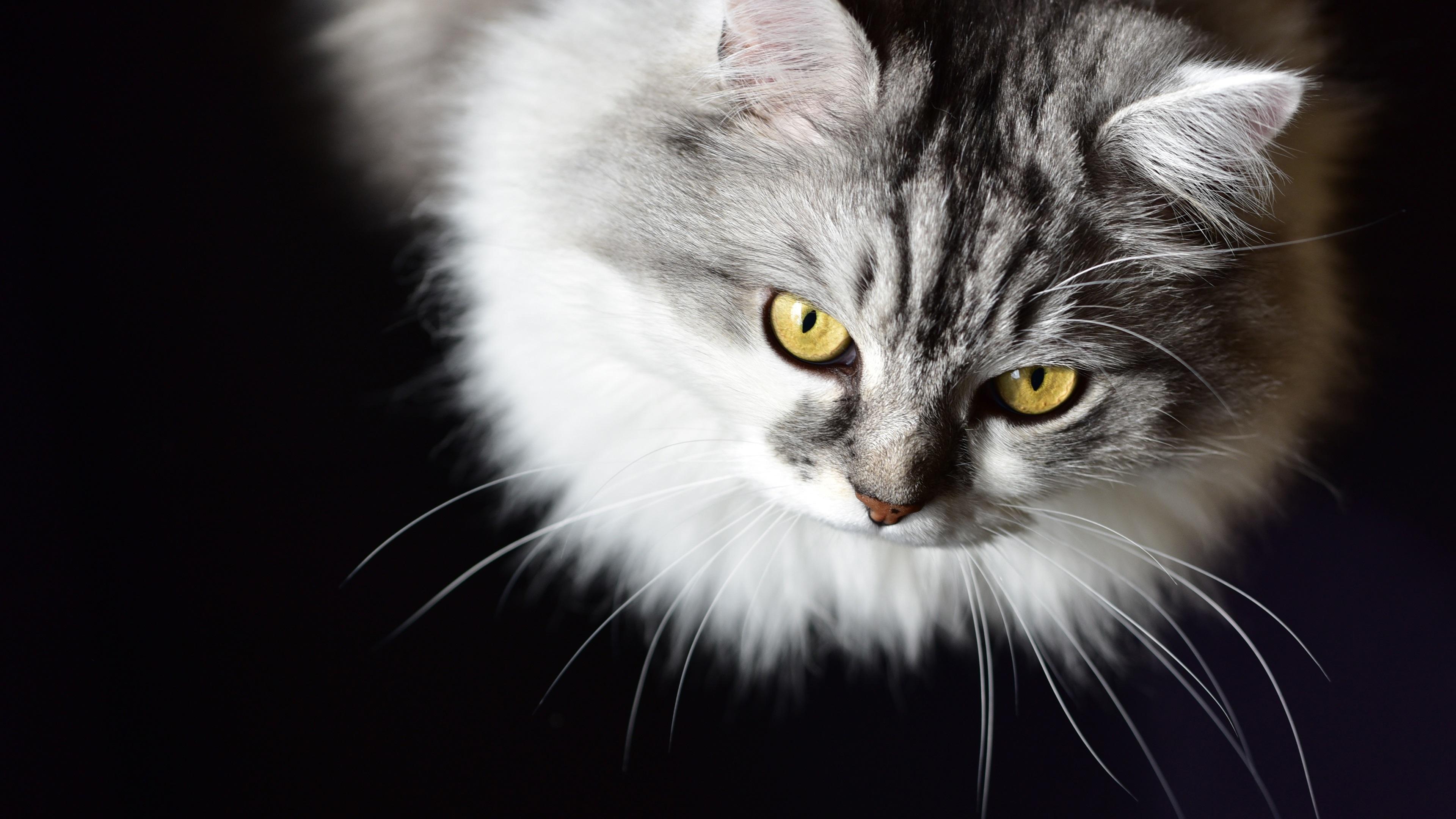 kitten wallpaper free