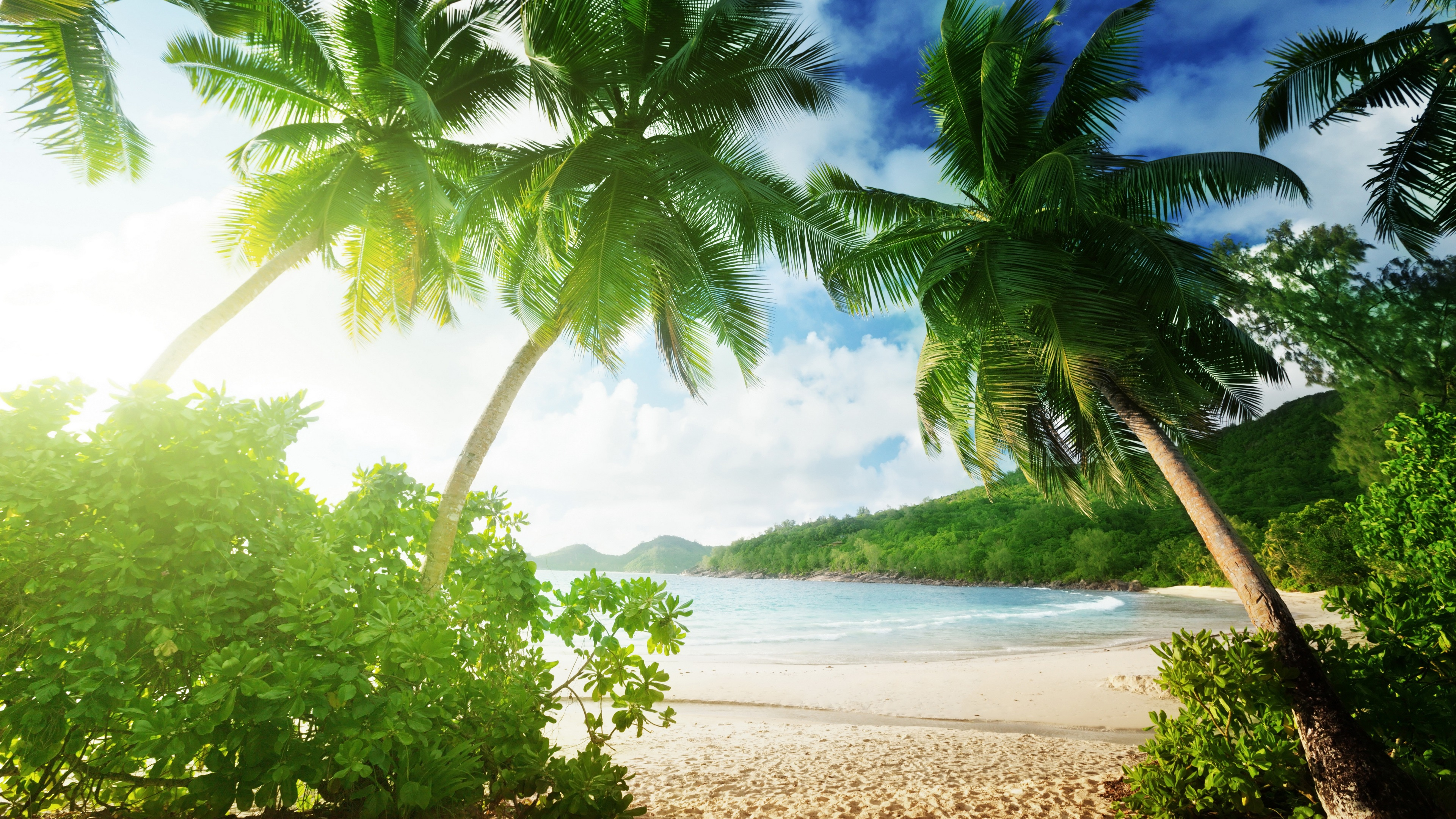 10 Most Popular Beautiful Beach Backgrounds Palm Trees: Wallpaper Tropical Beach, Palm Trees, Sand, Sea, Coast