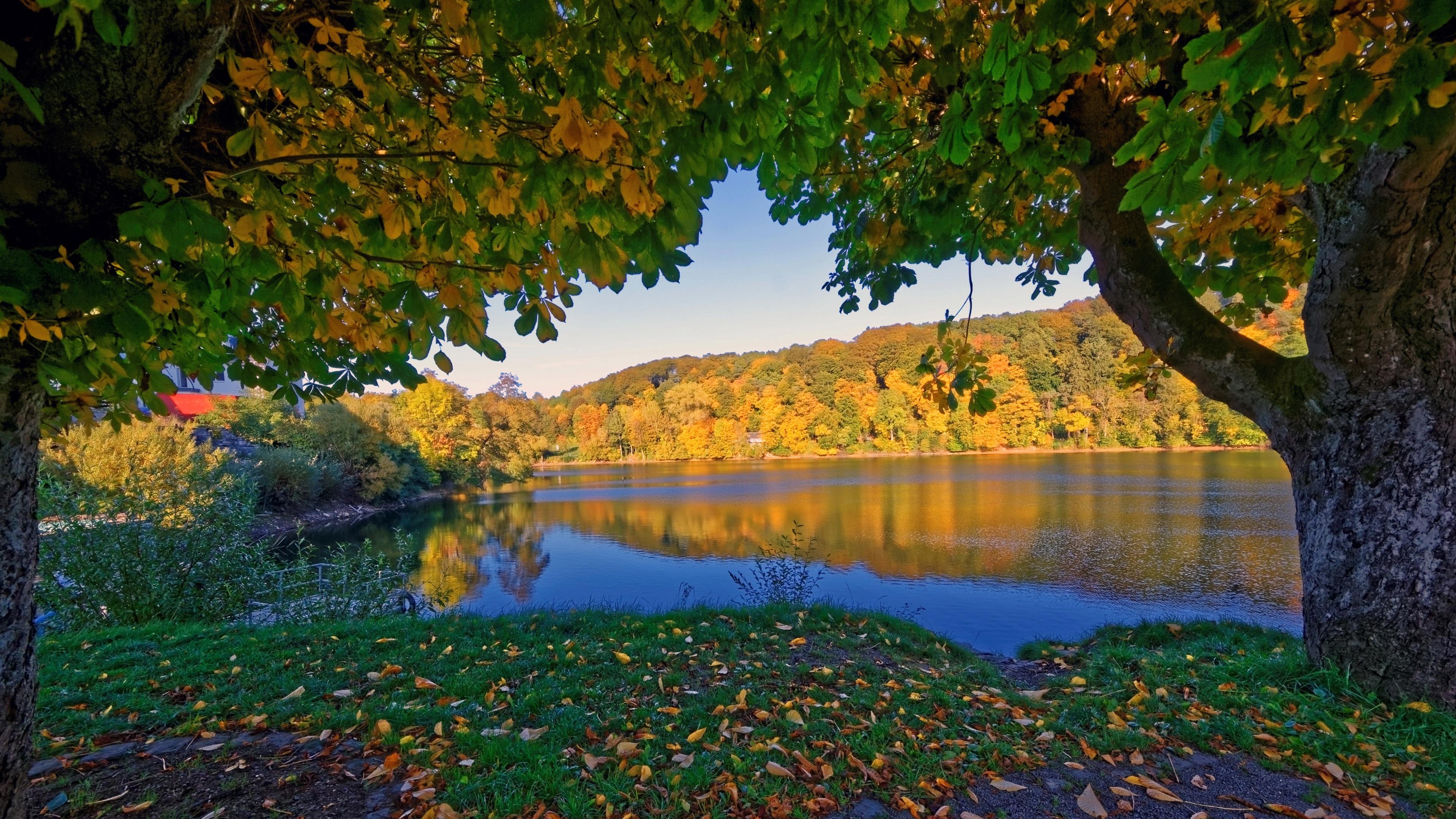가을, 나무, 강, 노란색 단풍 독일 Ulmen 배경 화면 ... Yellow