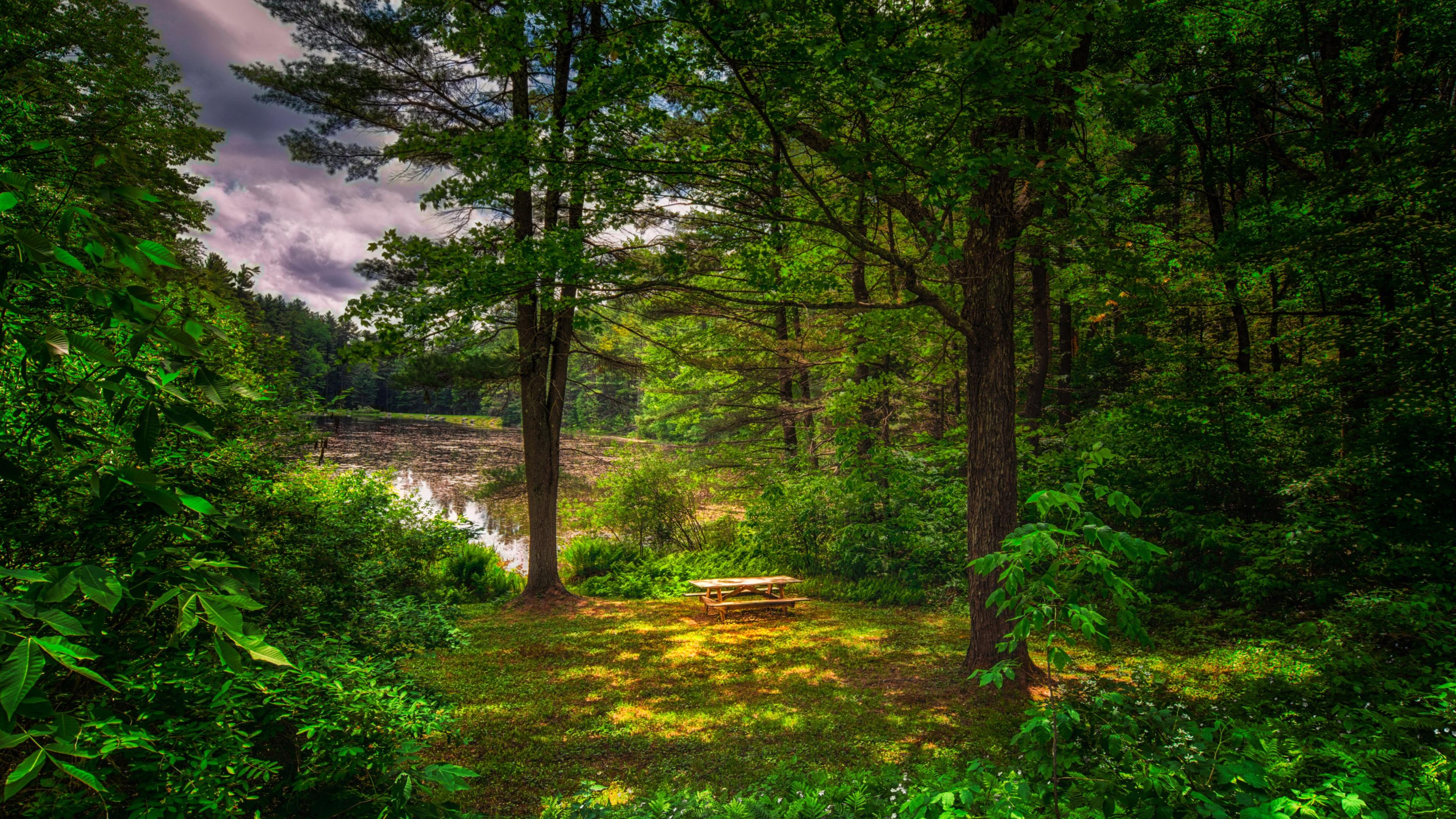 озеро деревья зелень лес лето  № 3246387  скачать