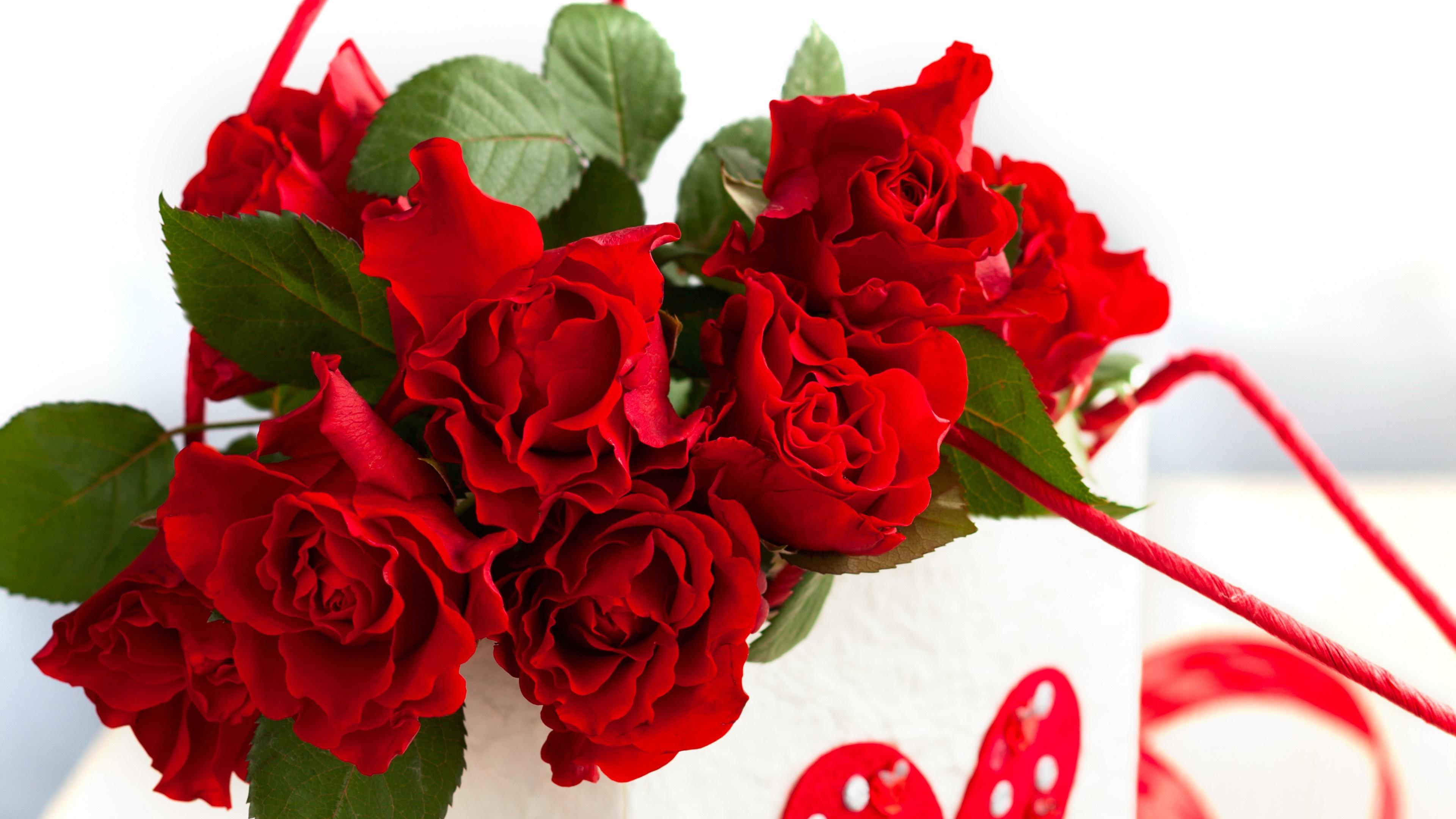 Wallpapers Rosas Rojas: Fondos De Pantalla Bolsa De Papel, Flores Rosas Rojas