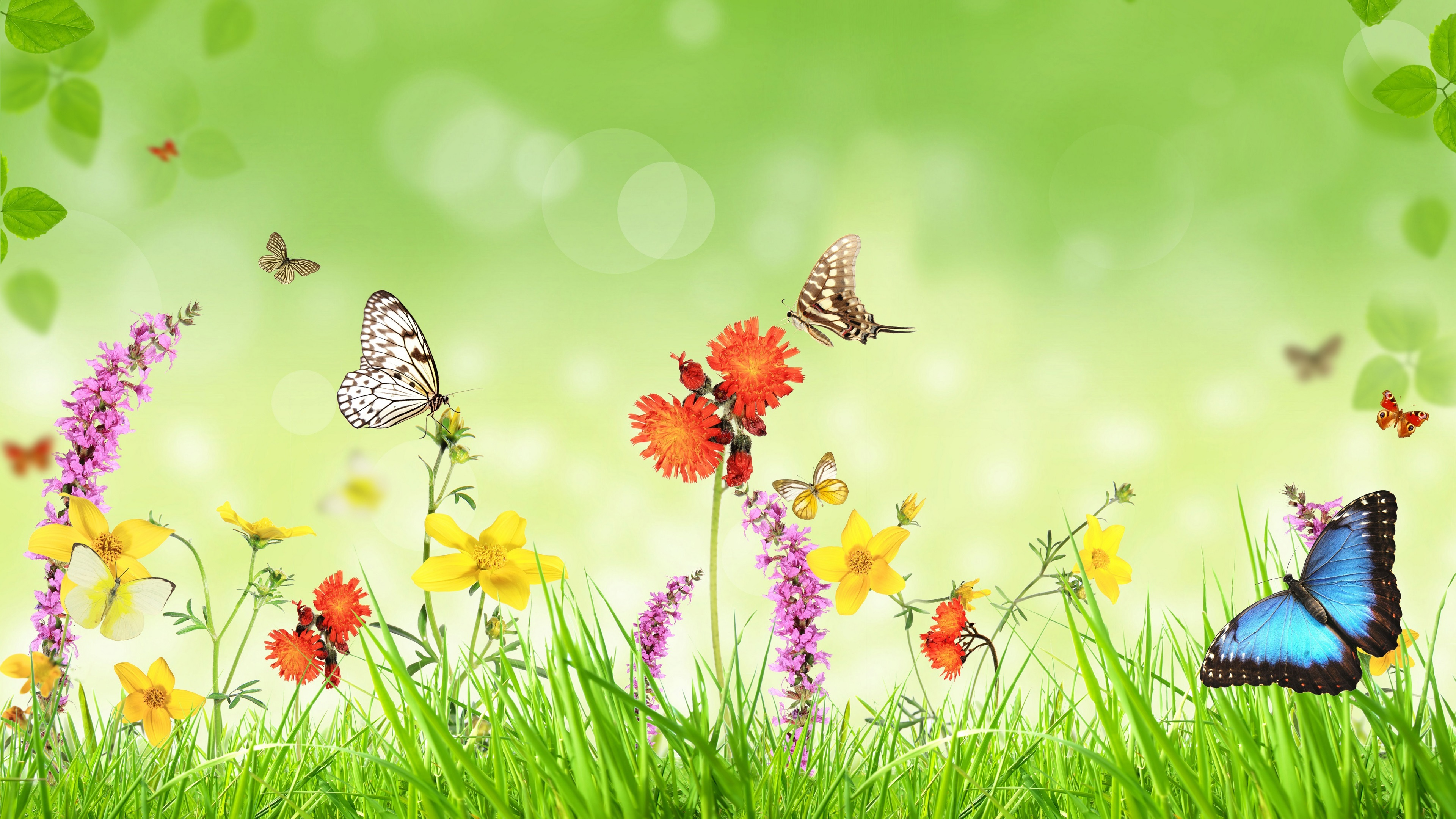 Spring Flowers Grass Butterfly Green Background