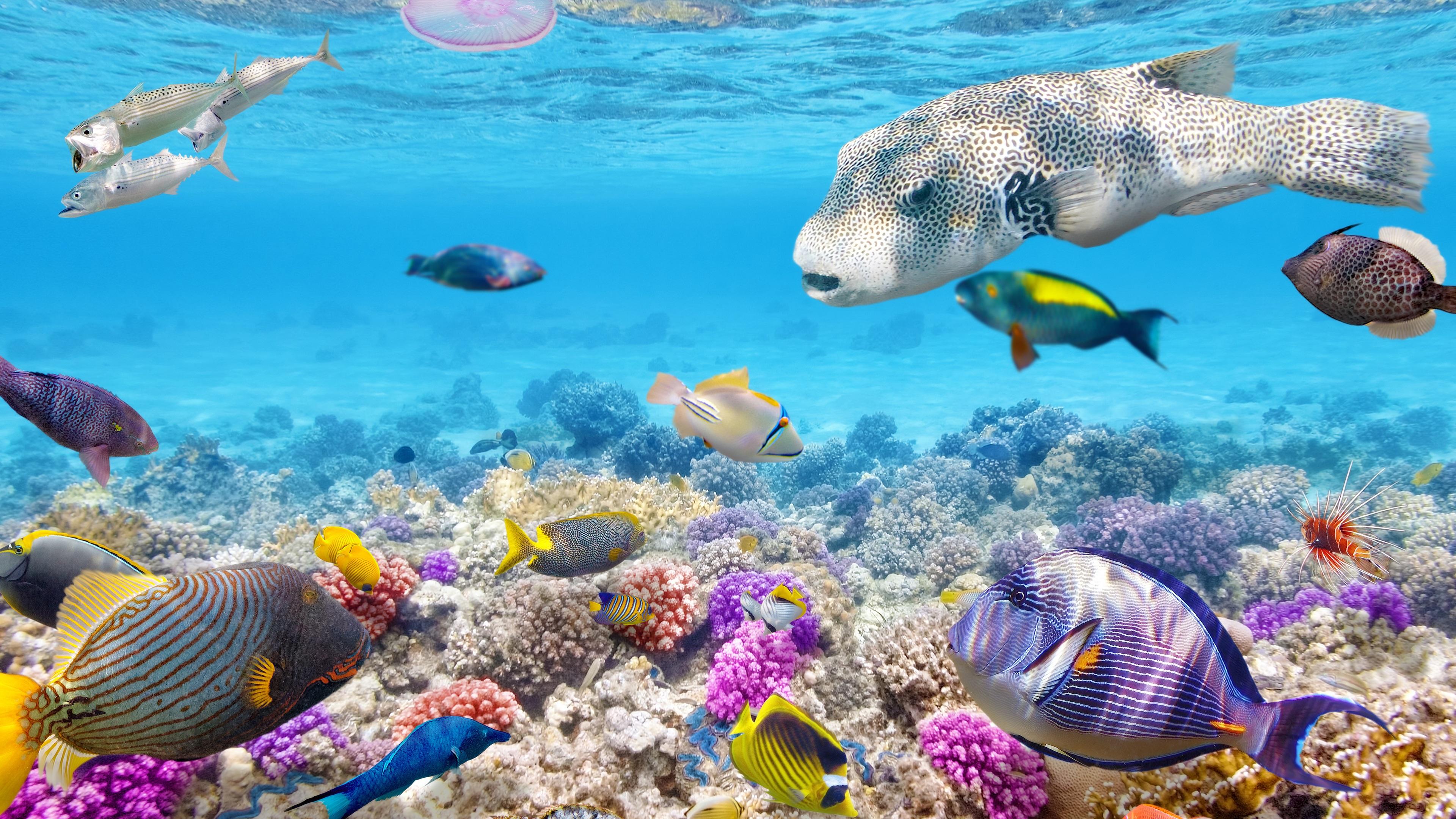 Wallpaper Tropical Fishes Underwater Coral Reef Ocean