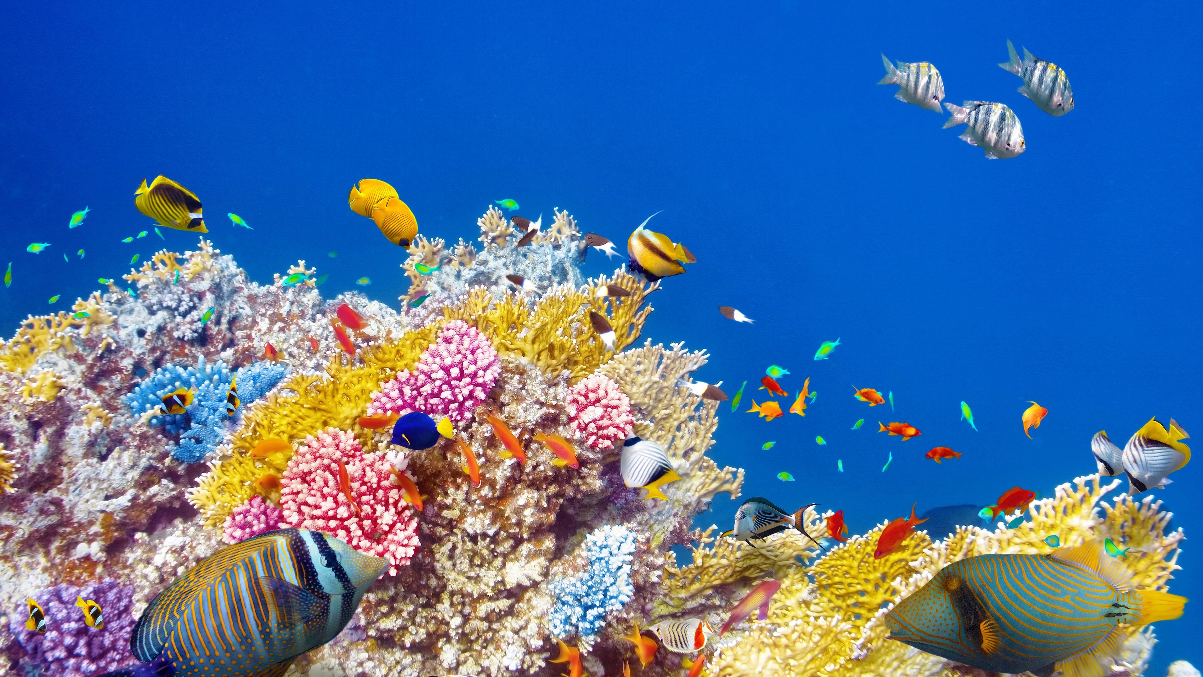 Яркие краски подводного мира бесплатно