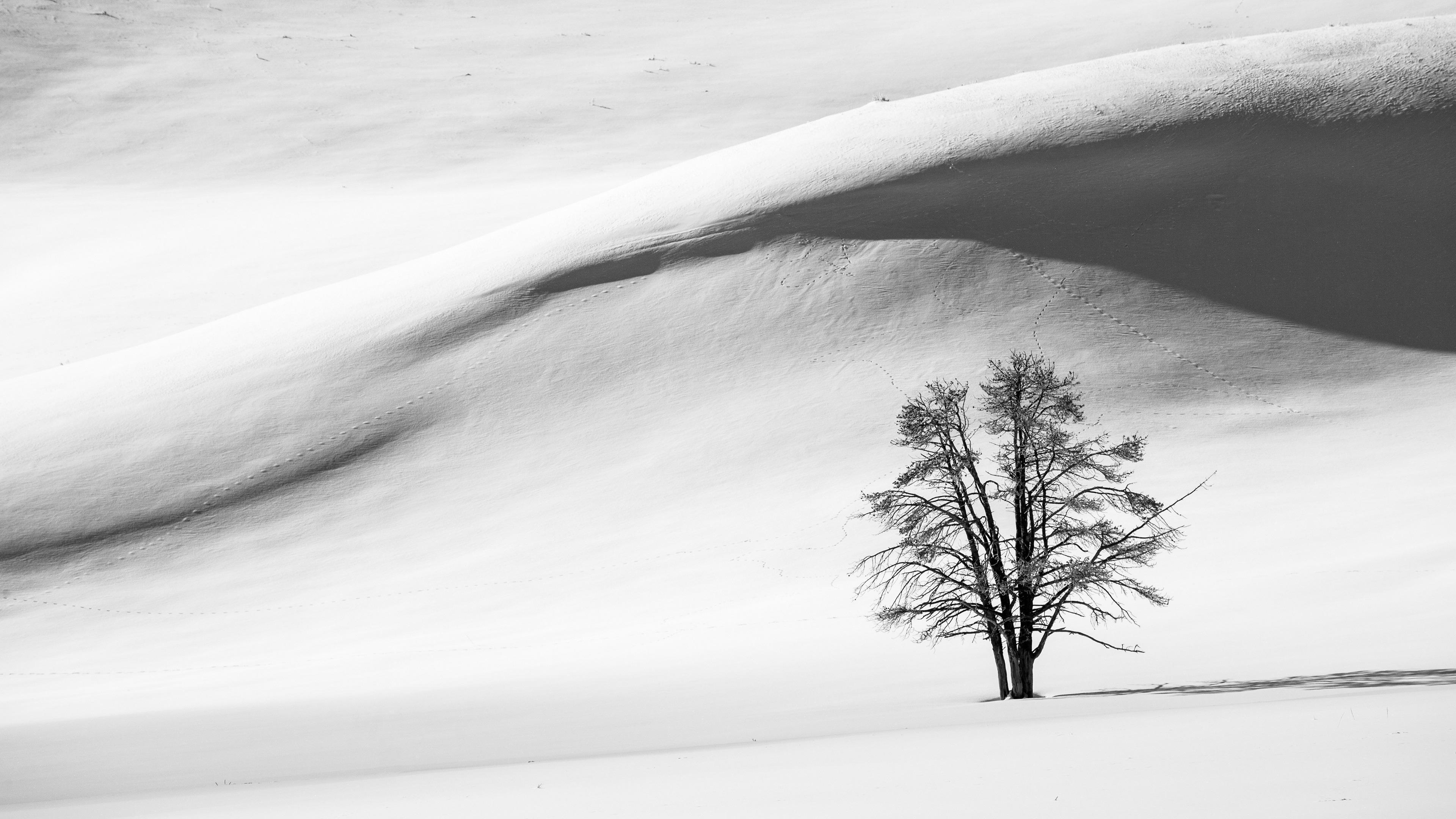Papéis De Parede Preto E Branco Neve Inverno árvore