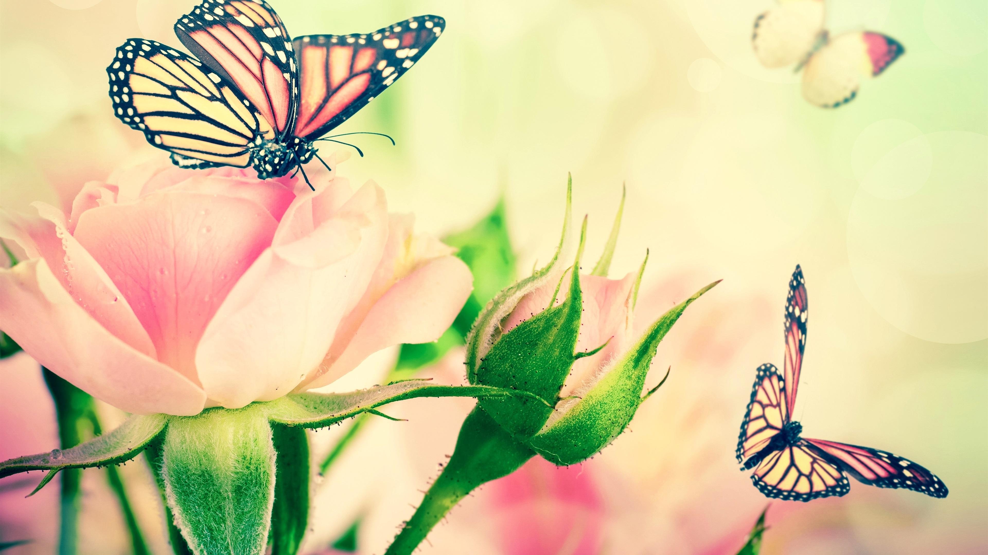 Открытки бабочки розы, днем рождения прикольные