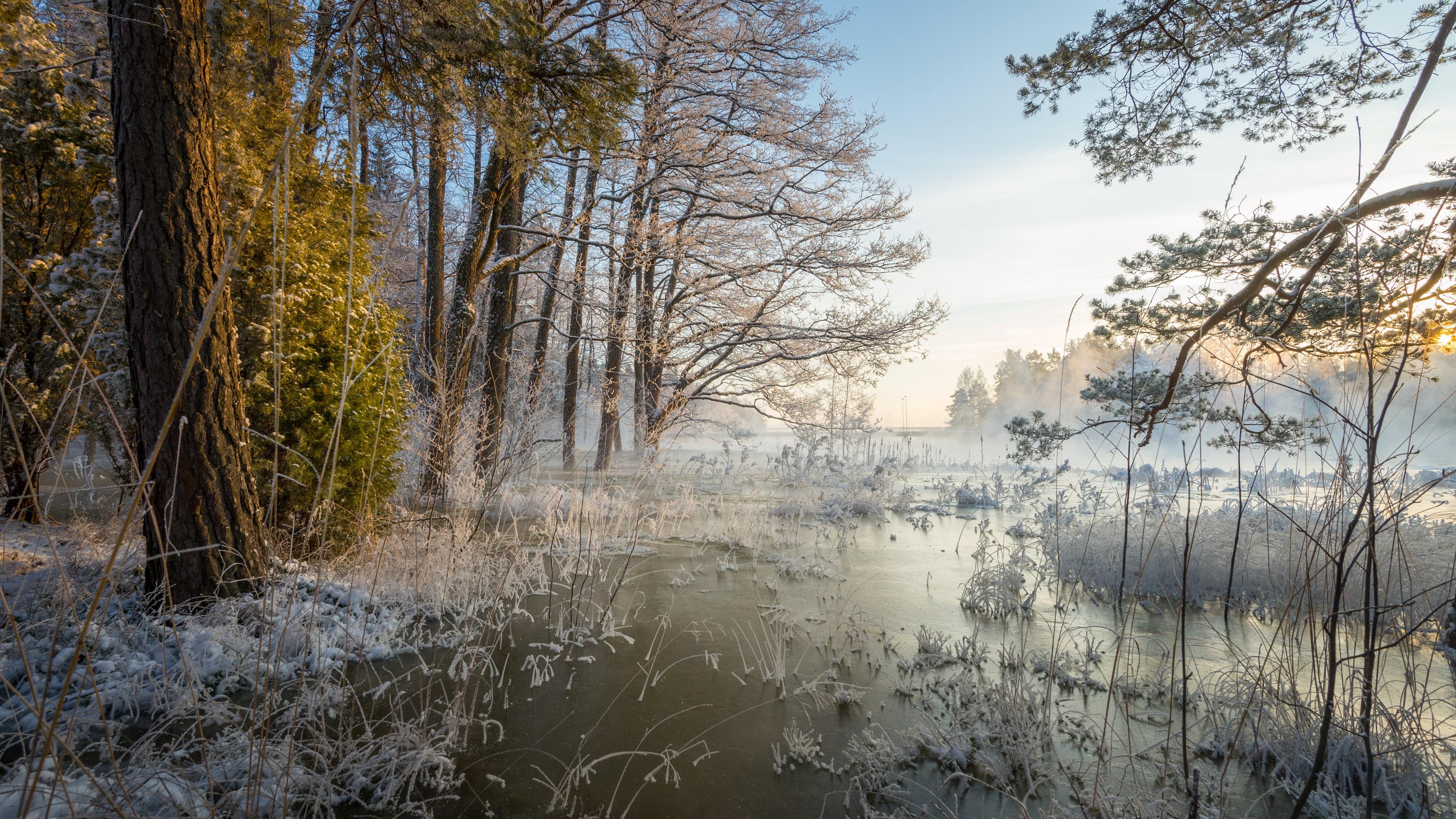 снег лес ручей деревья без регистрации