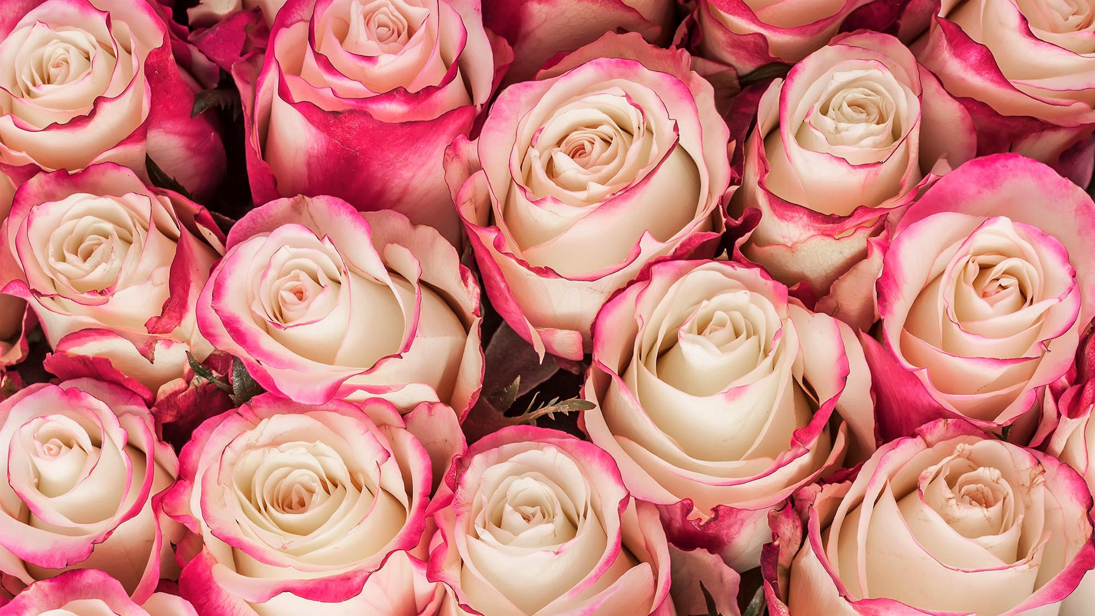 Розы картинки с большим разрешением