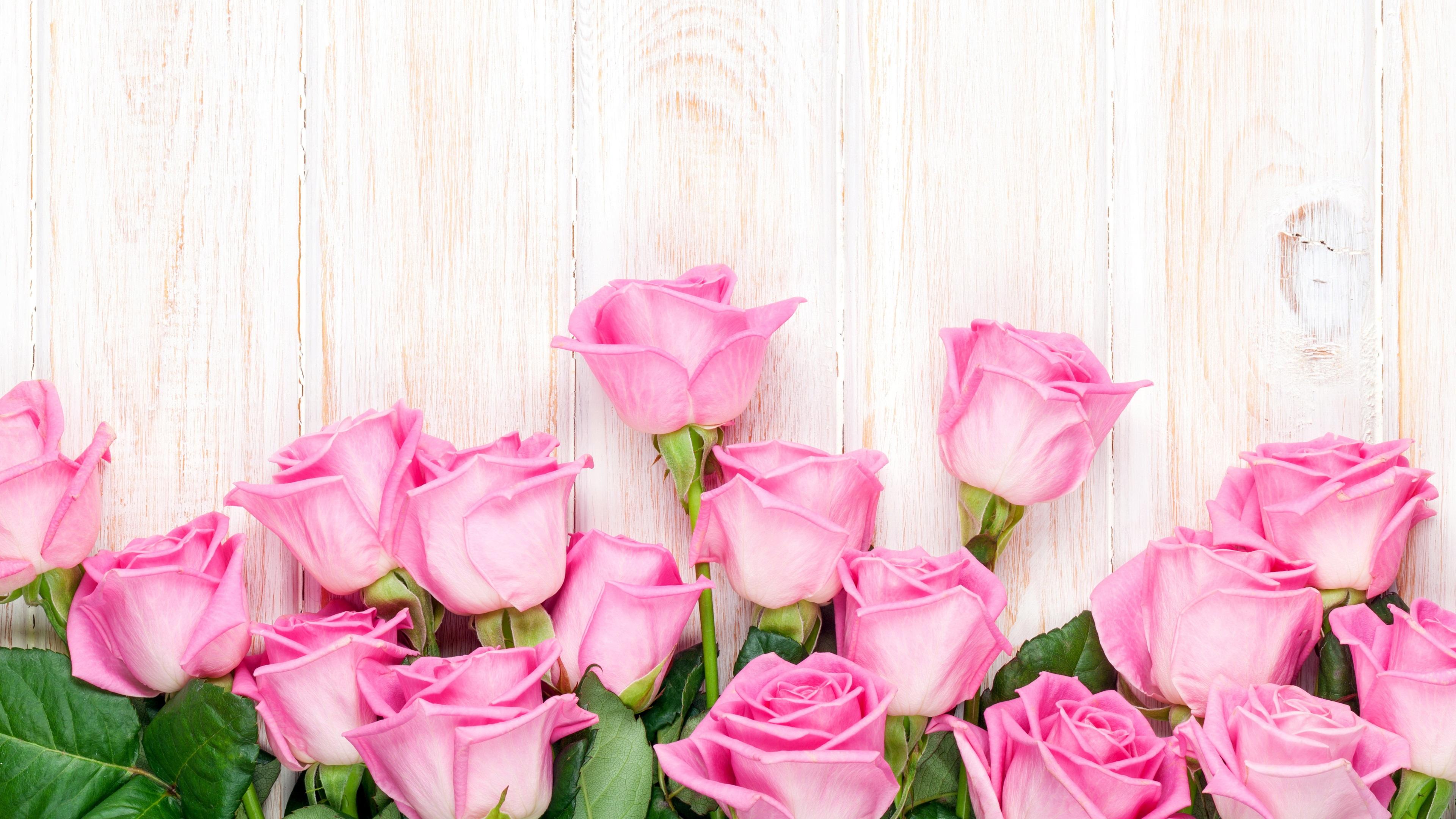 Fondos De Pantalla Rosa: Rosa Rosa Flores, Fondo De Madera Fondos De Pantalla