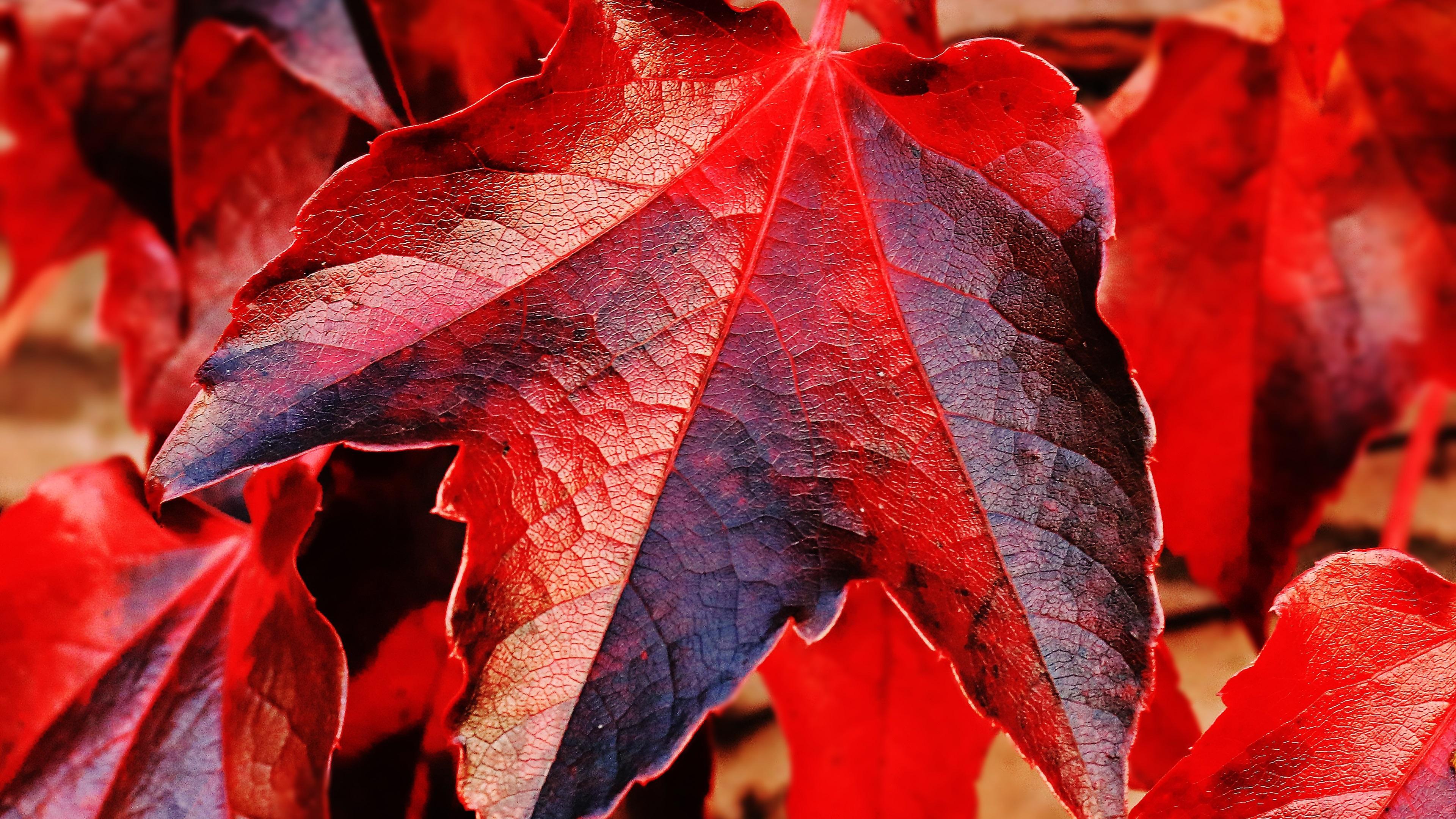 Красный листок загрузить