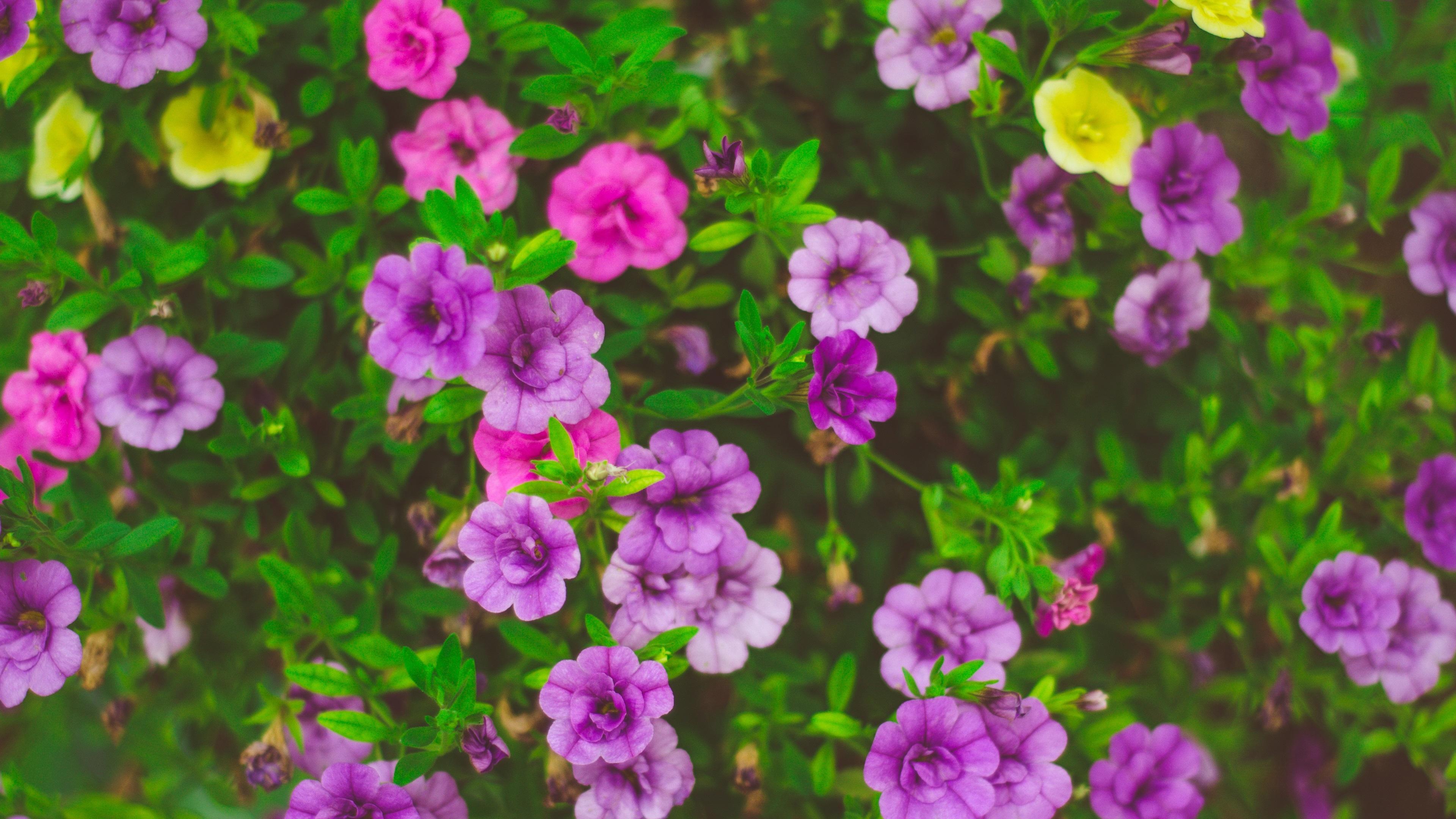 Wallpaper Beautiful Flowers Pink Purple Yellow 3840x2160 Uhd 4k