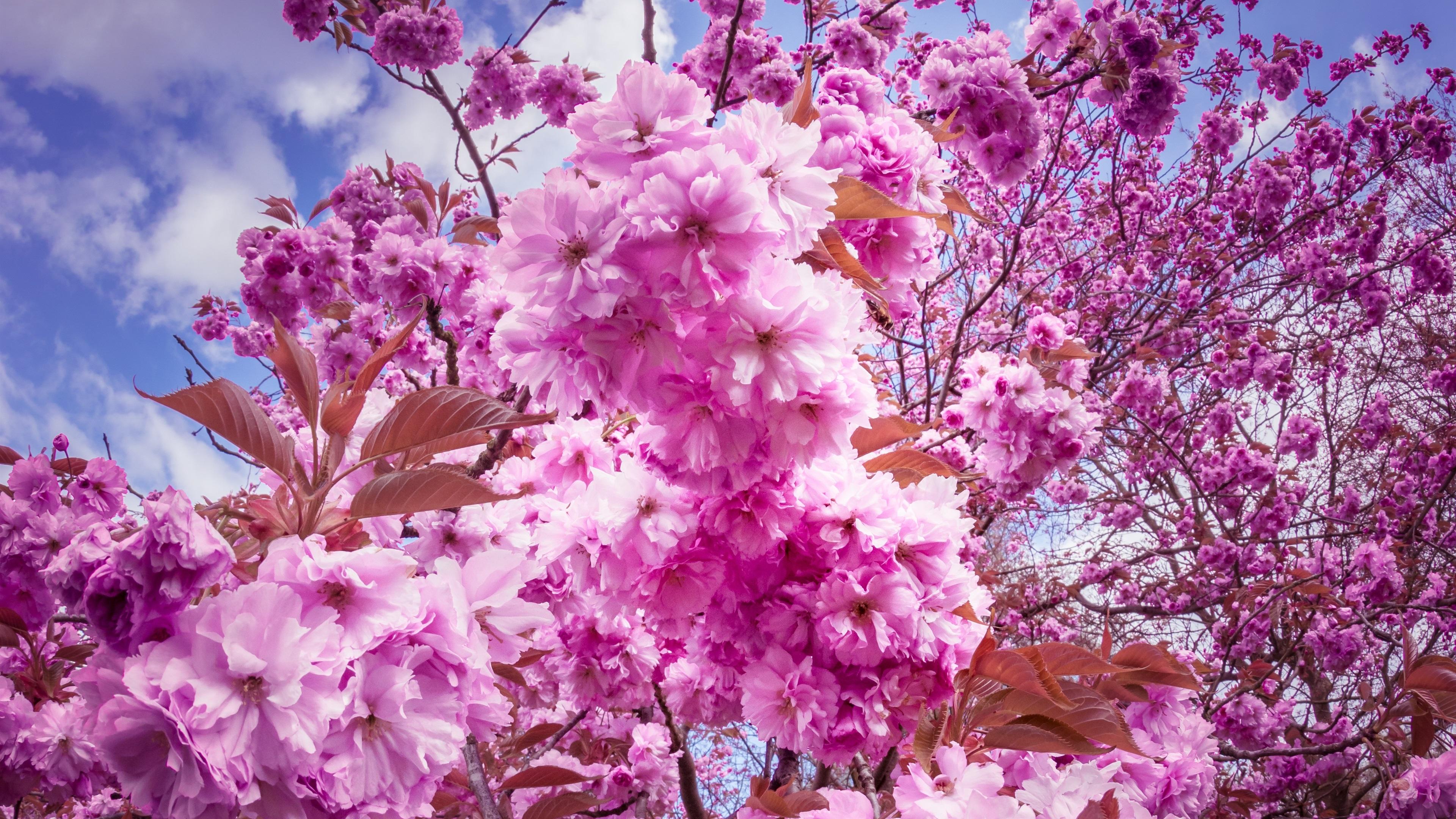 Fleurs De Printemps Fleurissent 4k Fonds D Ecran Fonds D