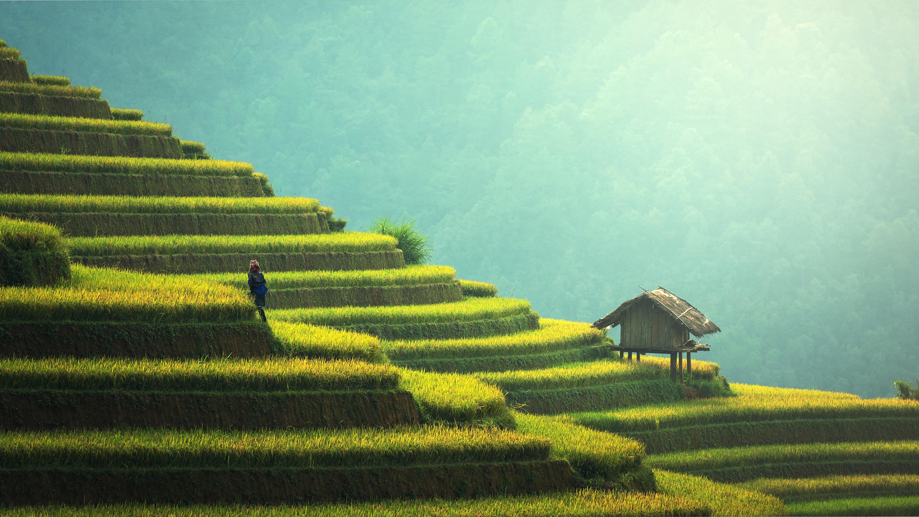 Fondos De Pantalla Hermosas Terrazas De Arroz China Campo