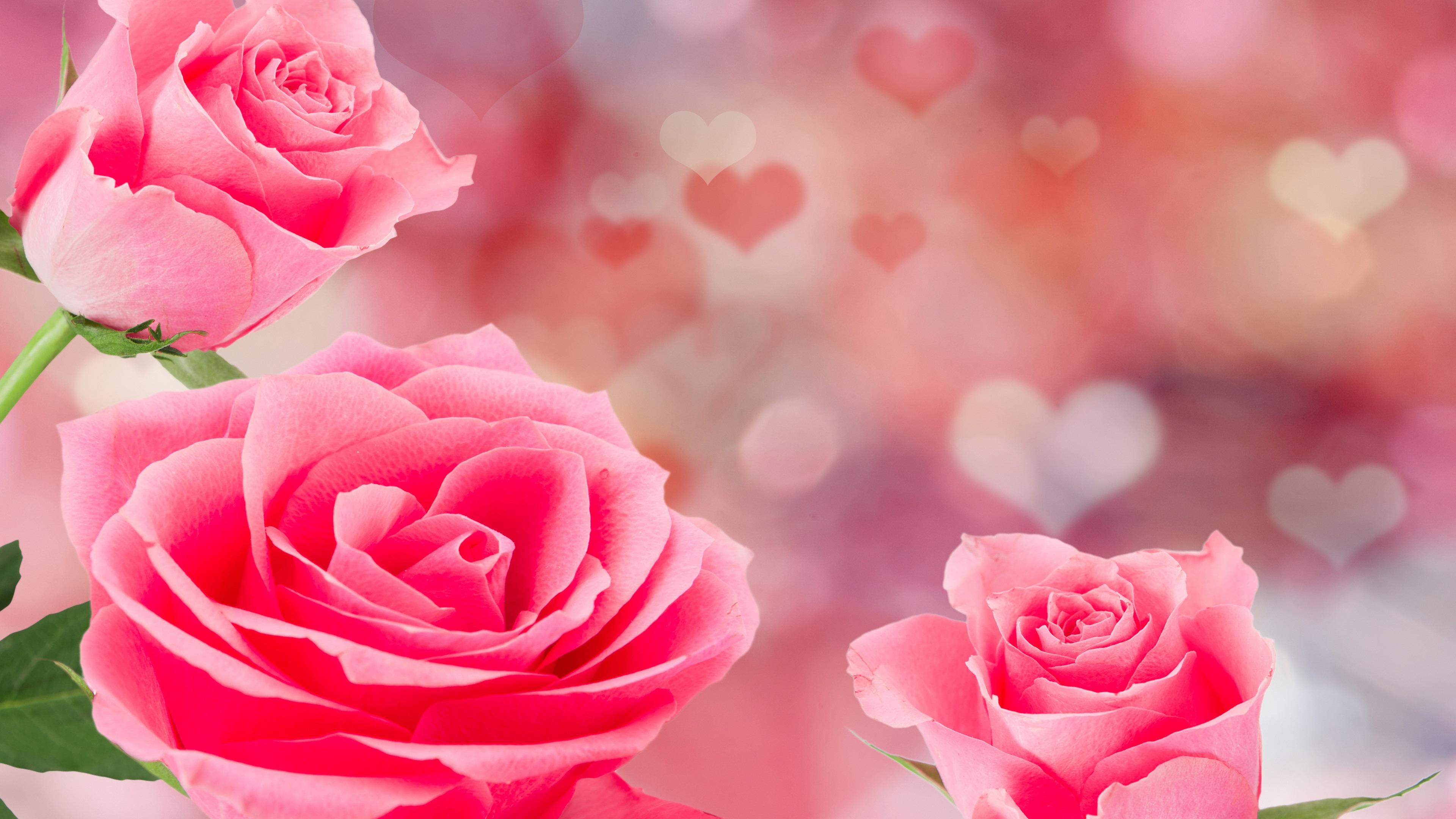 Fondos De Pantalla Rosa: Fondos De Pantalla Rosas Rosas, Fondo De Corazones De Amor