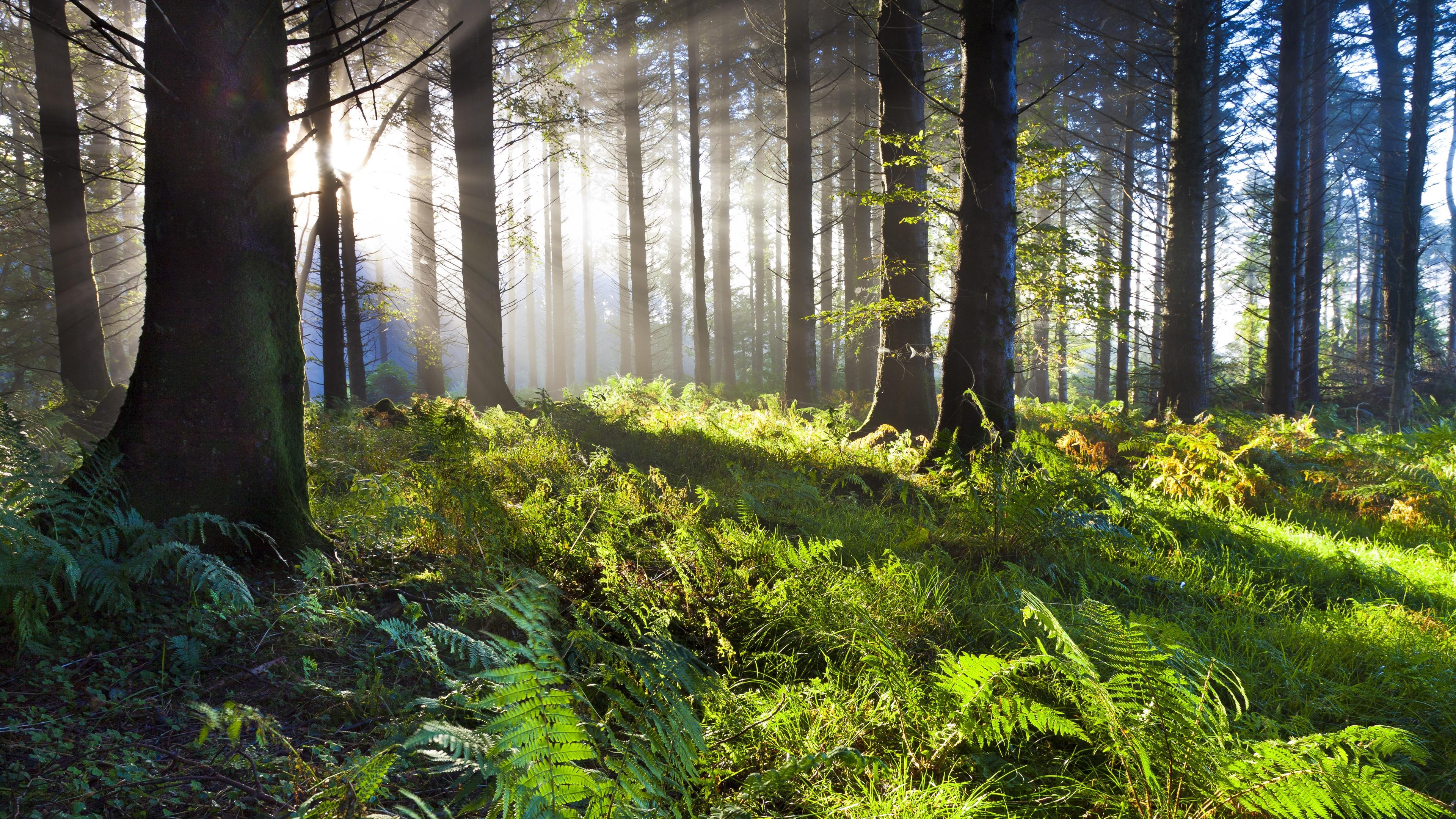 лес чаща лучи загрузить