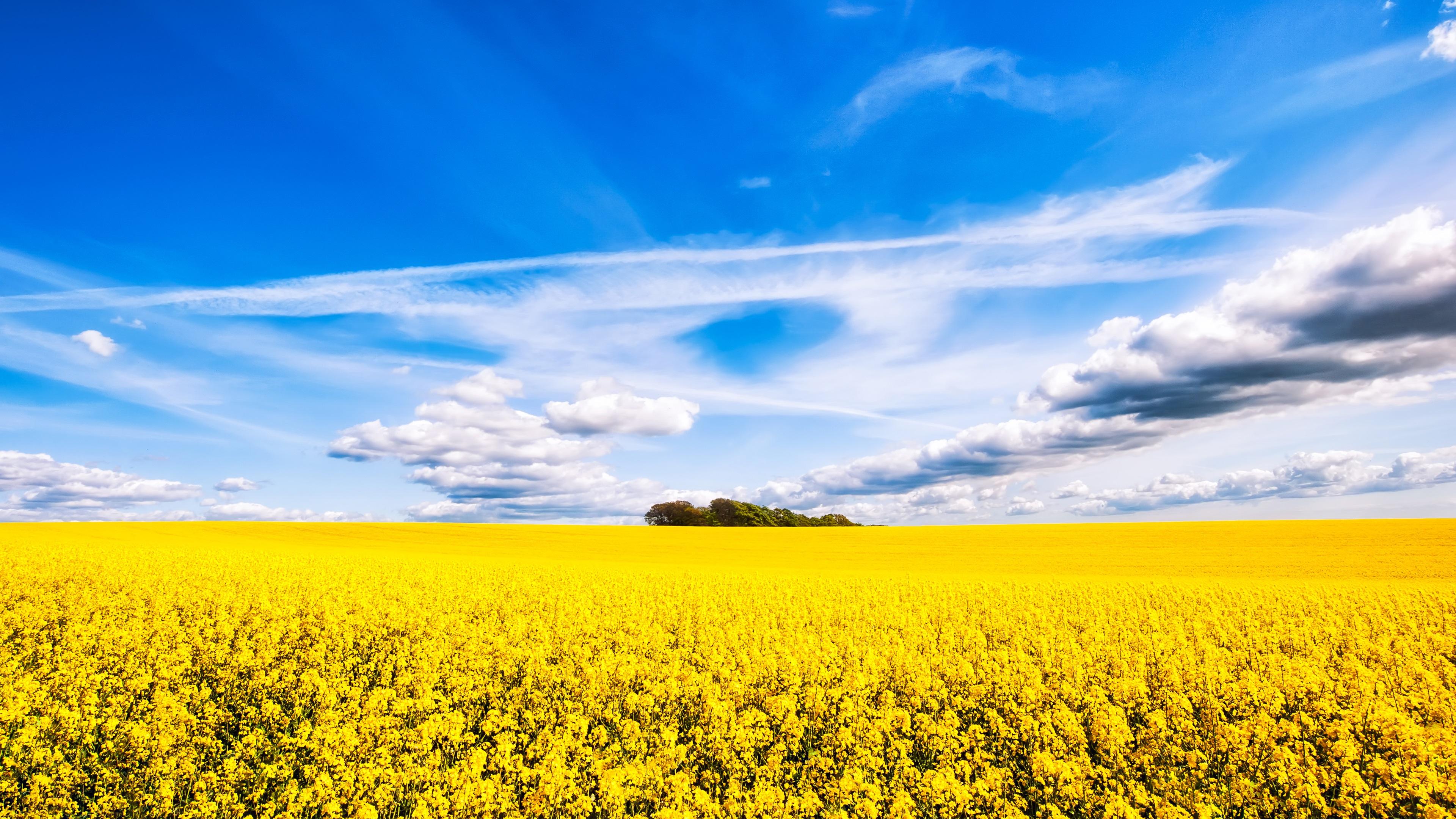 壁紙 菜の花の畑 美しい景色 3840x2160 Uhd 4k 無料のデスクトップの
