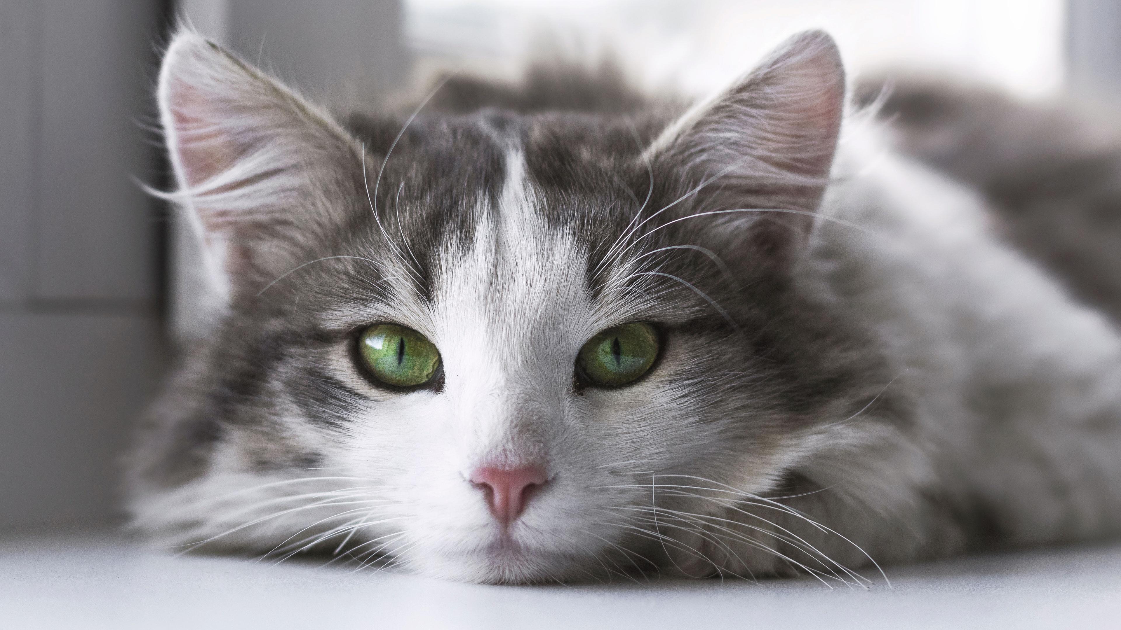 best tips to find a lost cat
