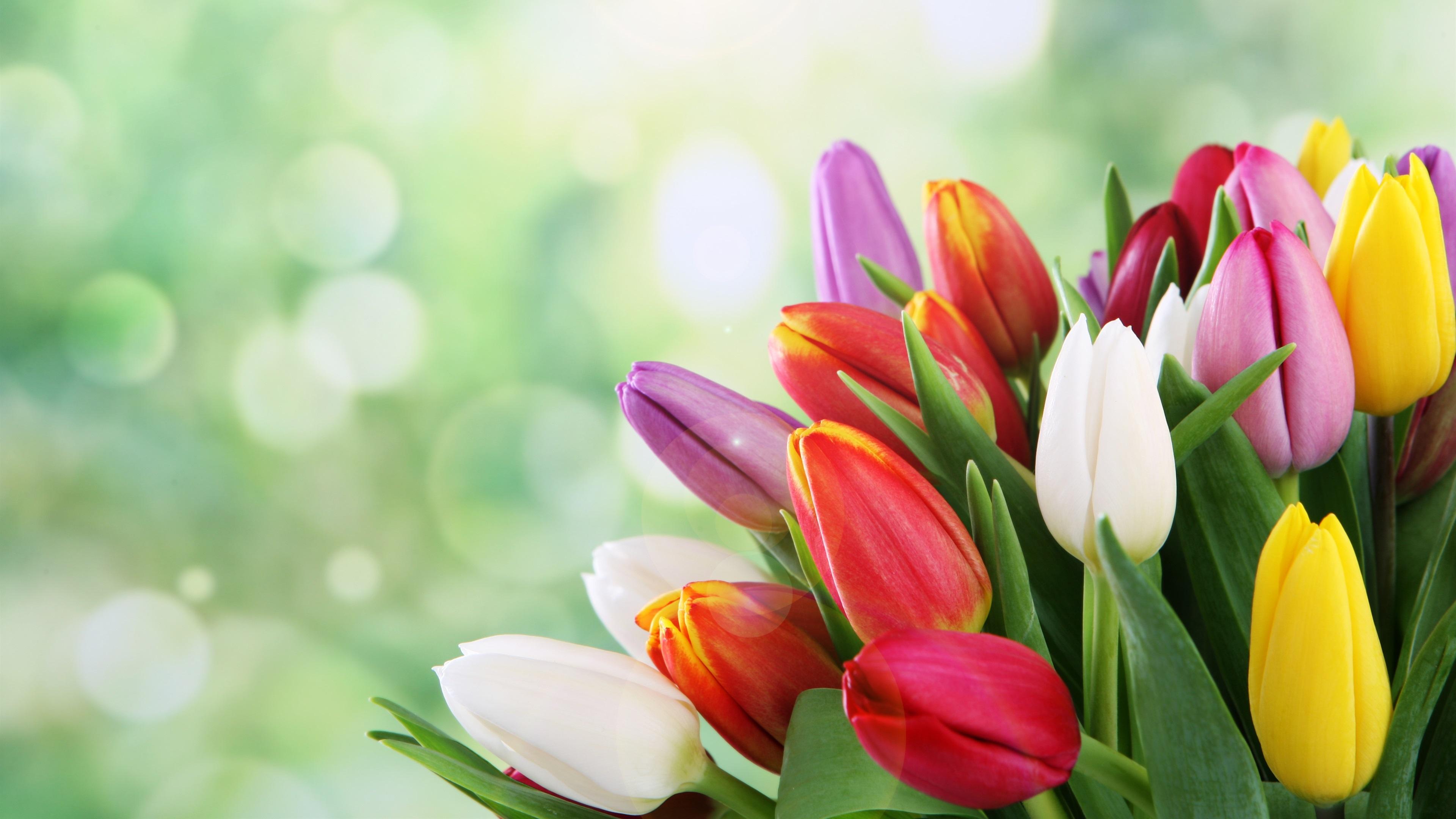 тюльпаны весна цветы скачать