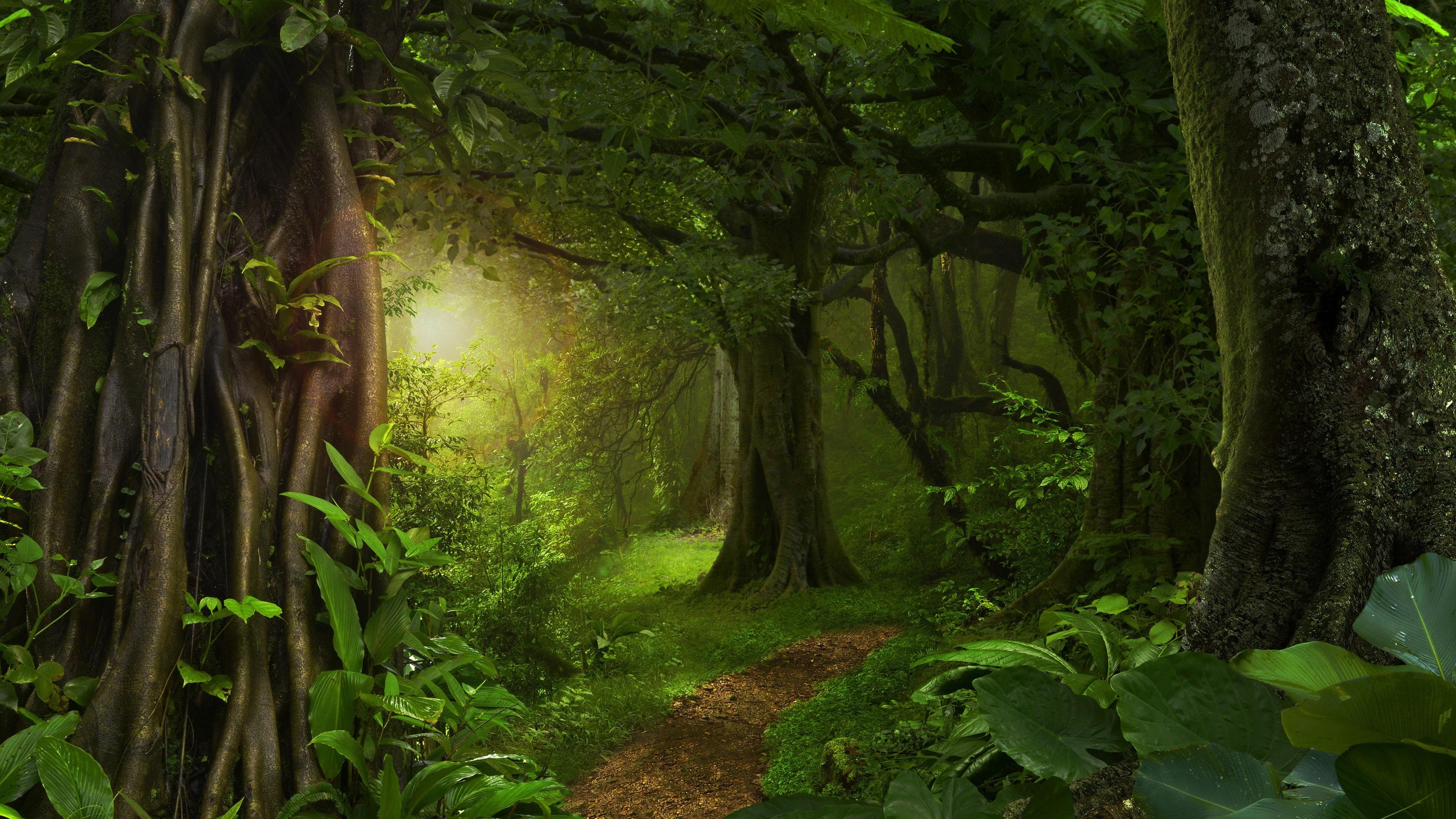 壁紙 森 ジャングル 樹木 道 緑 3840x2160 Uhd 4k 無料の