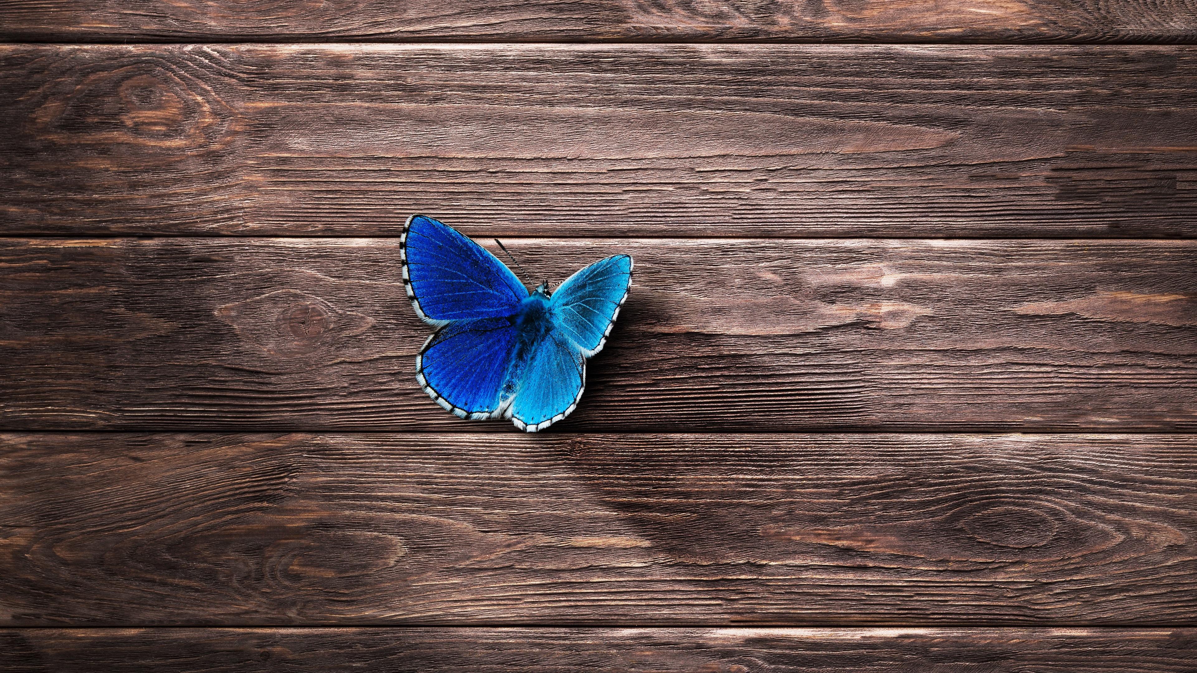 Fondos De Pantalla Fondo De Tablero De Madera De Colores: Fondos De Pantalla Mariposa Azul, Fondo De Tablero De