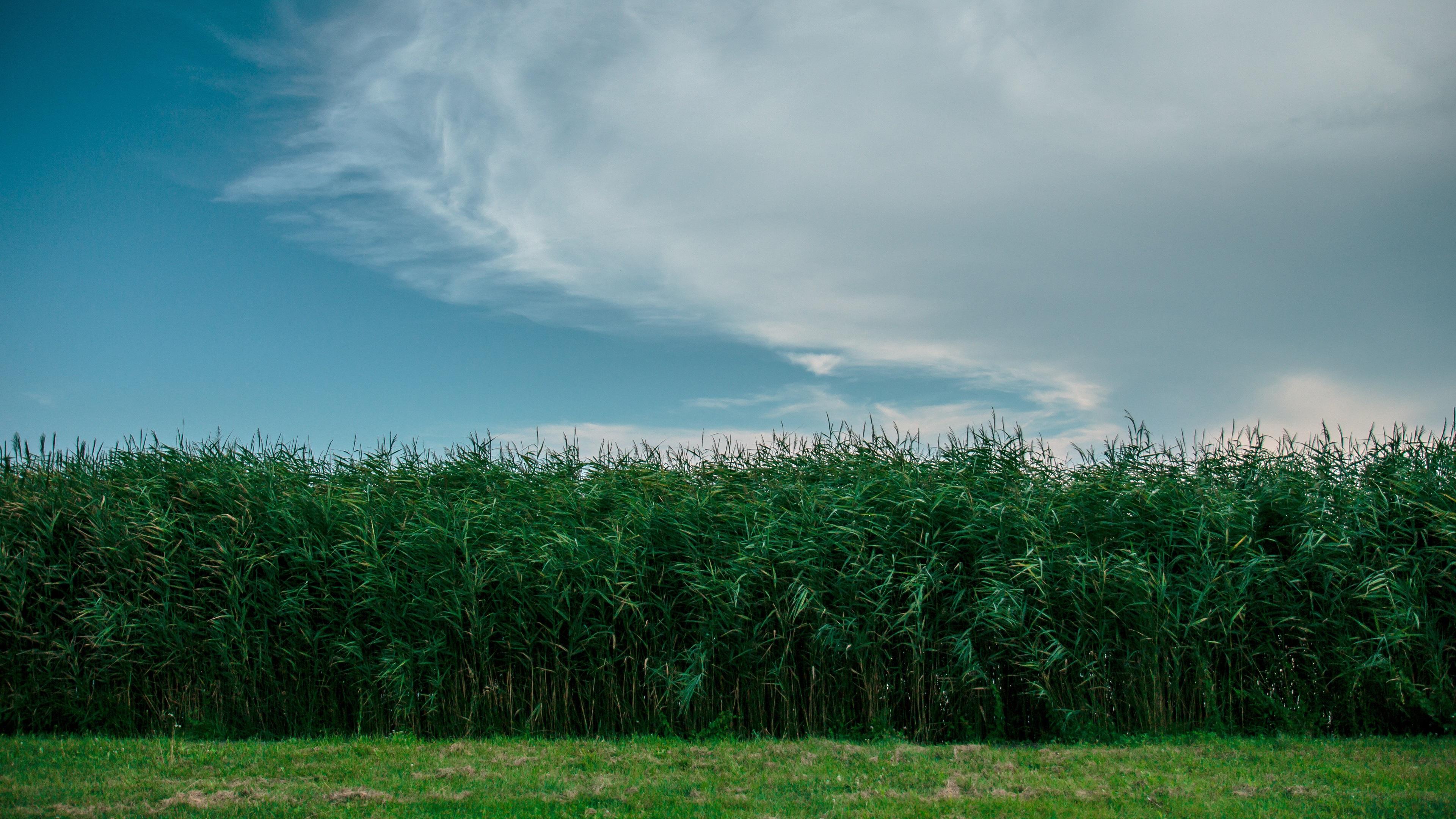 поле зелень лето field greens summer без регистрации