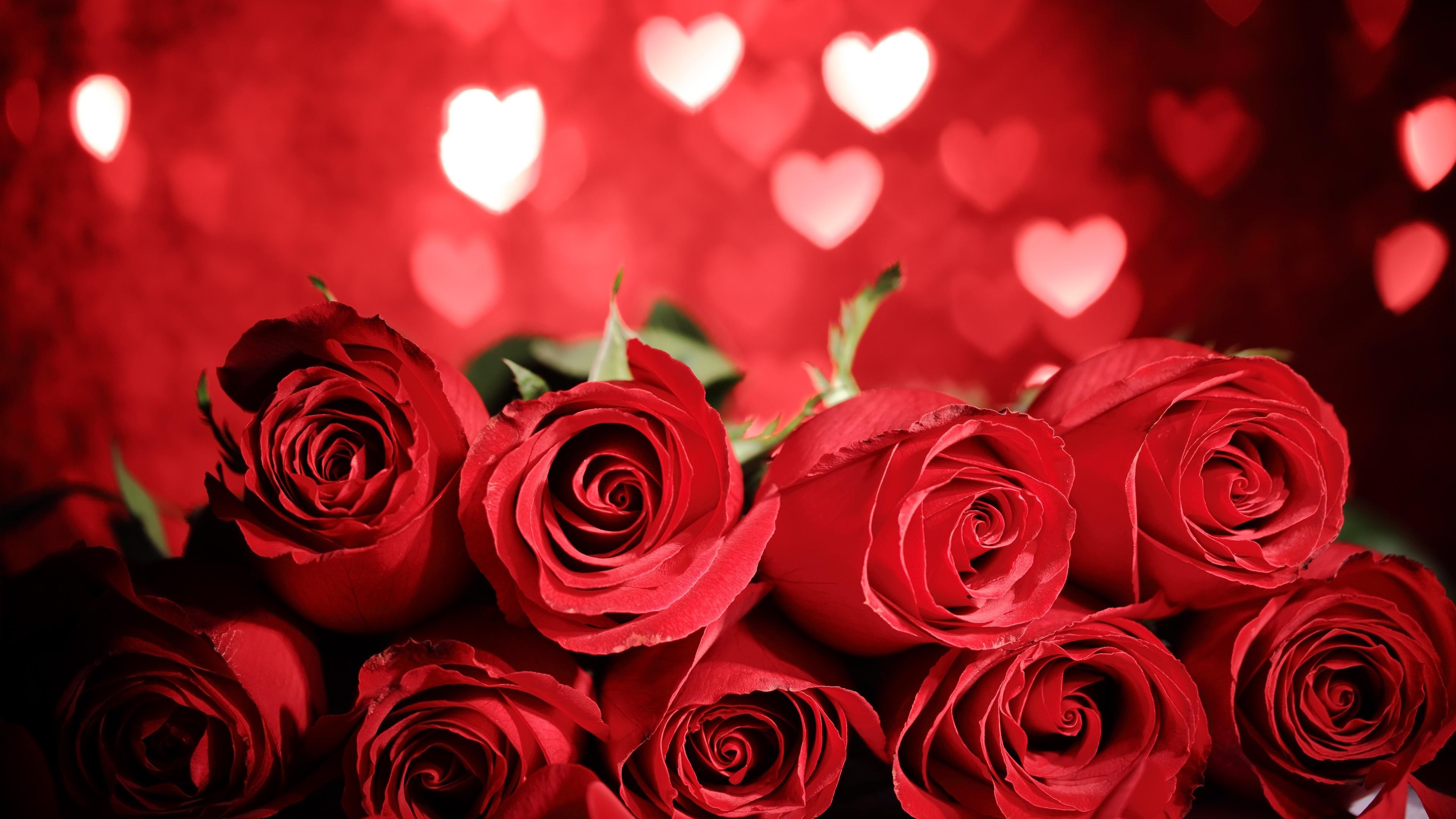 Fondos De Pantalla Hermosas Rosas Rojas, Fondo De Corazón