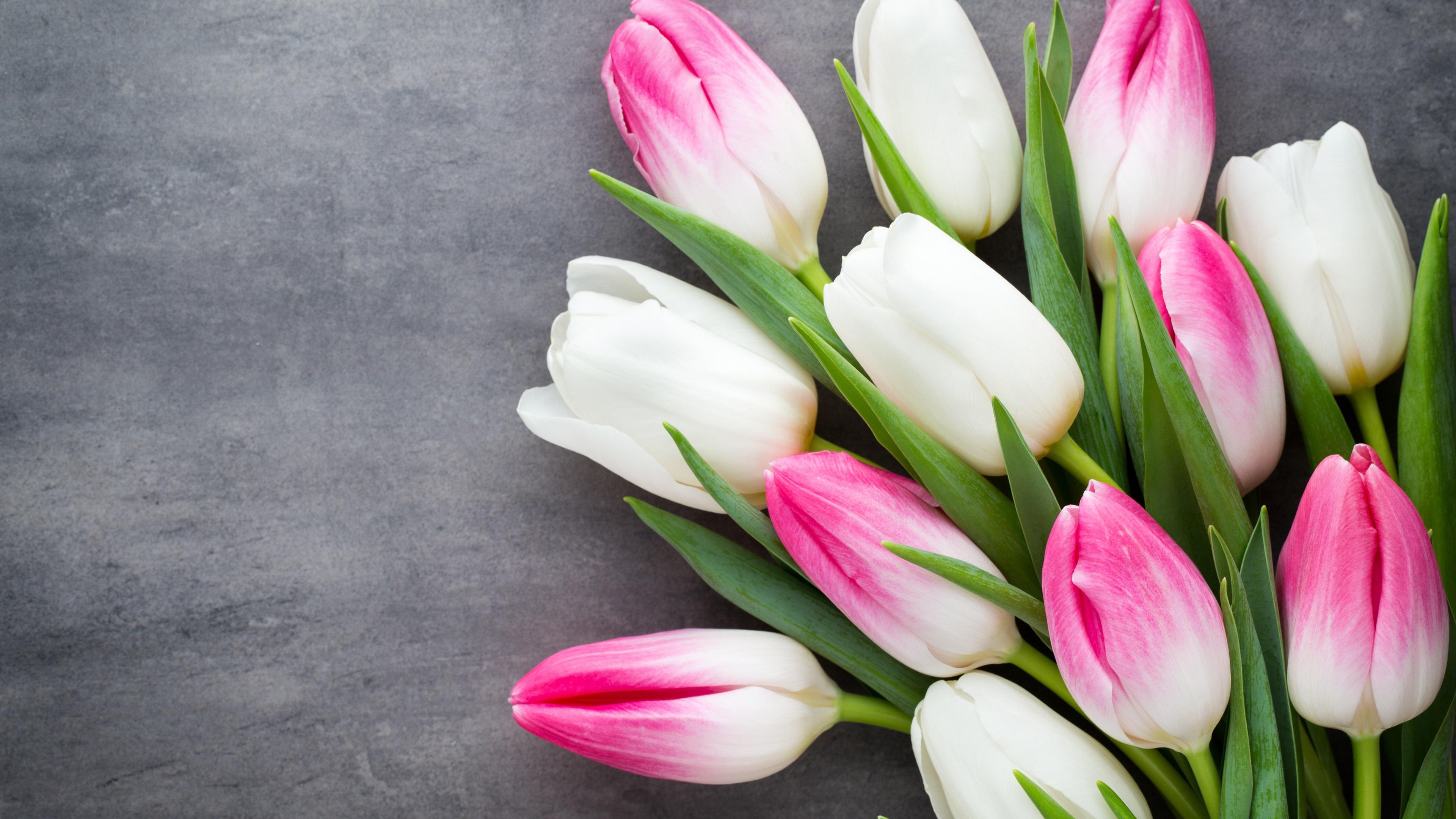 Картинки тюльпанов красивых