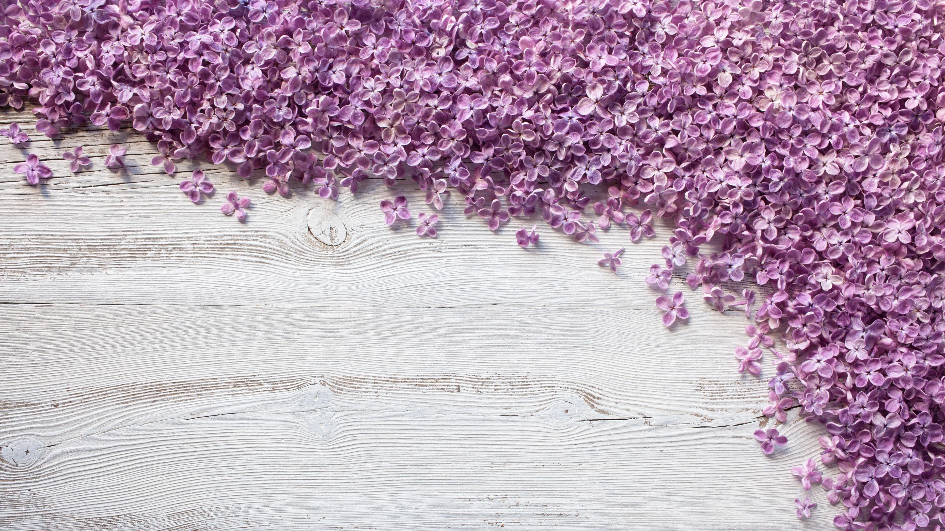 Fondos De Pantalla Fondo De Tablero De Madera De Colores: Fondos De Pantalla Muchas Flores Púrpuras De La Lila En
