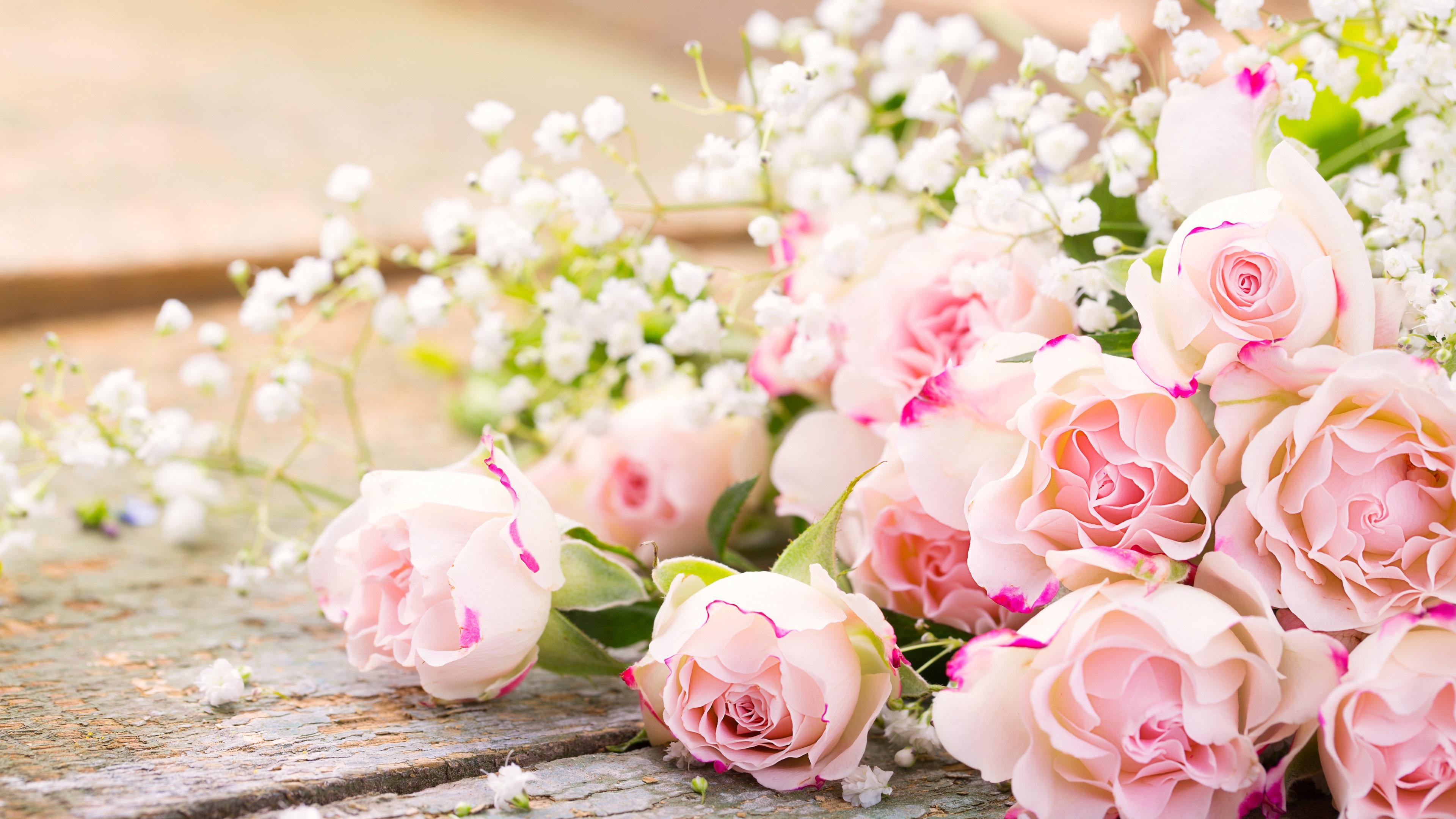 член открытка с нежно розовыми цветами происхождения яблони белый