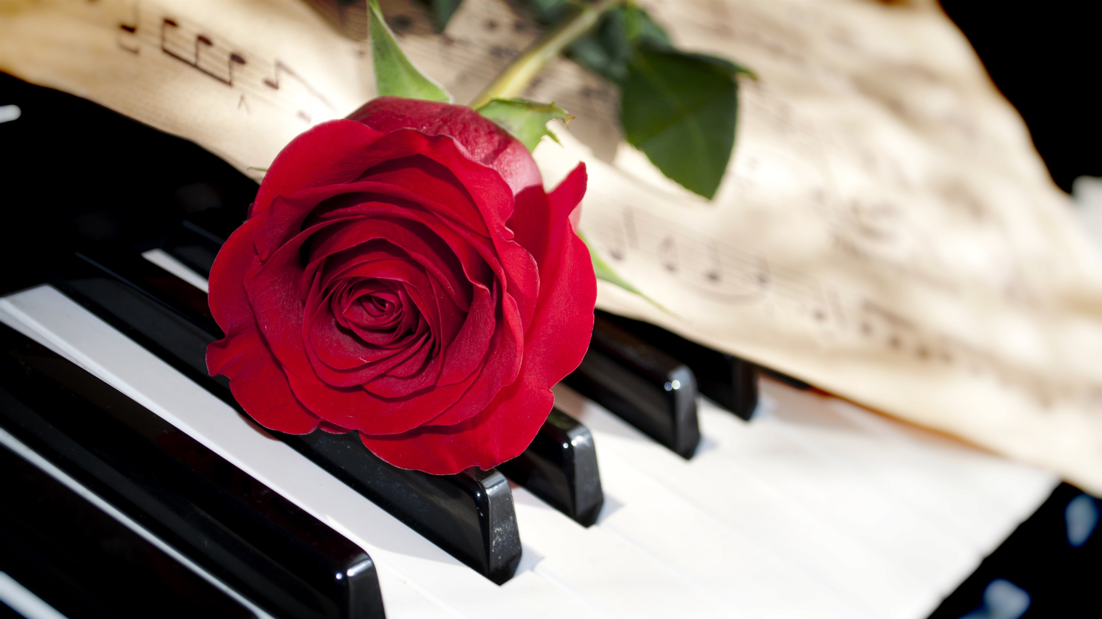 Wallpaper Red Rose Piano 3840x2160 UHD 4K Picture Image