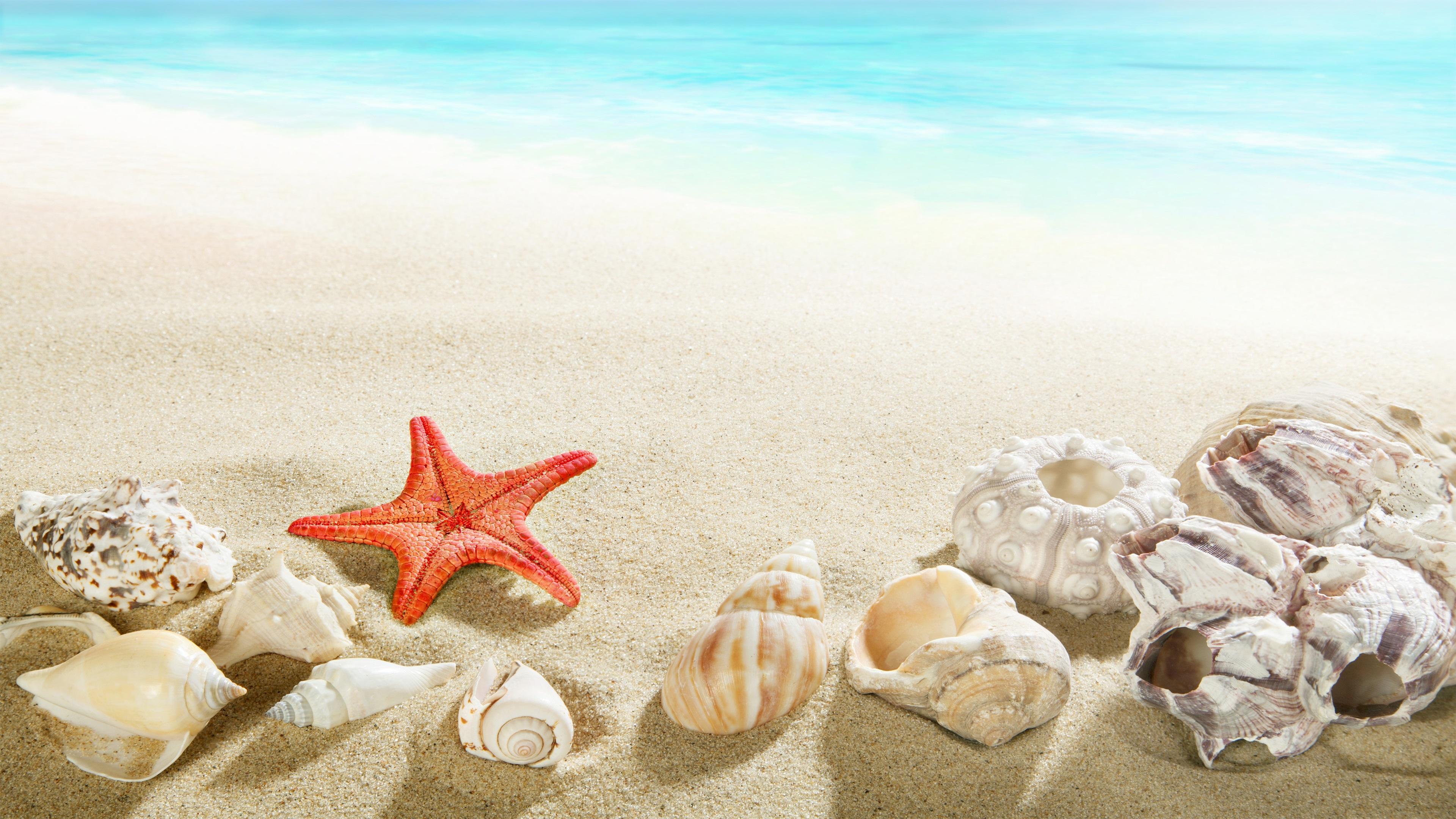 Fondos De Pantalla Del Mar: Fondos De Pantalla Playa, Concha Marina, Estrella De Mar