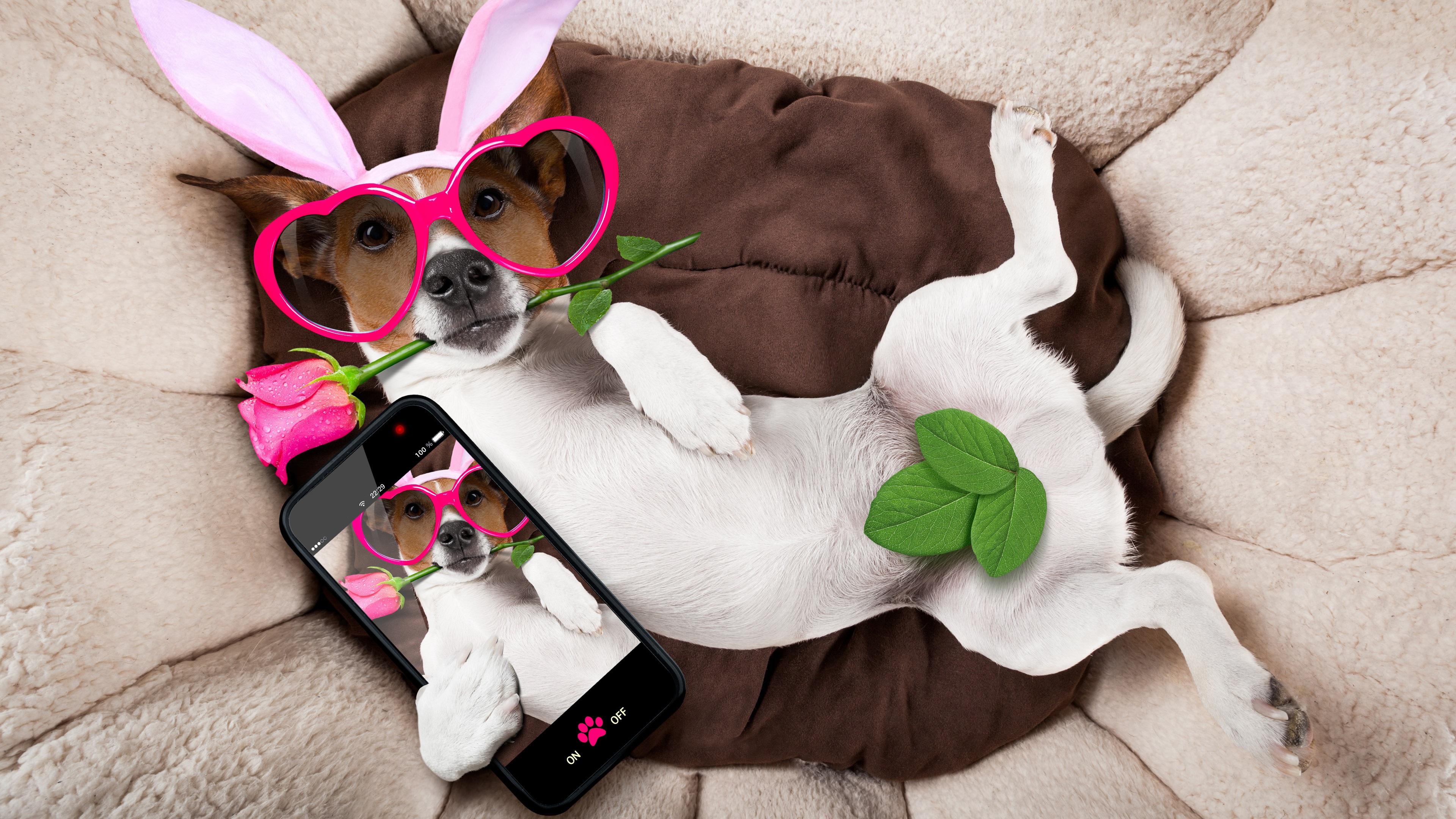 щенок с кроликом онлайн