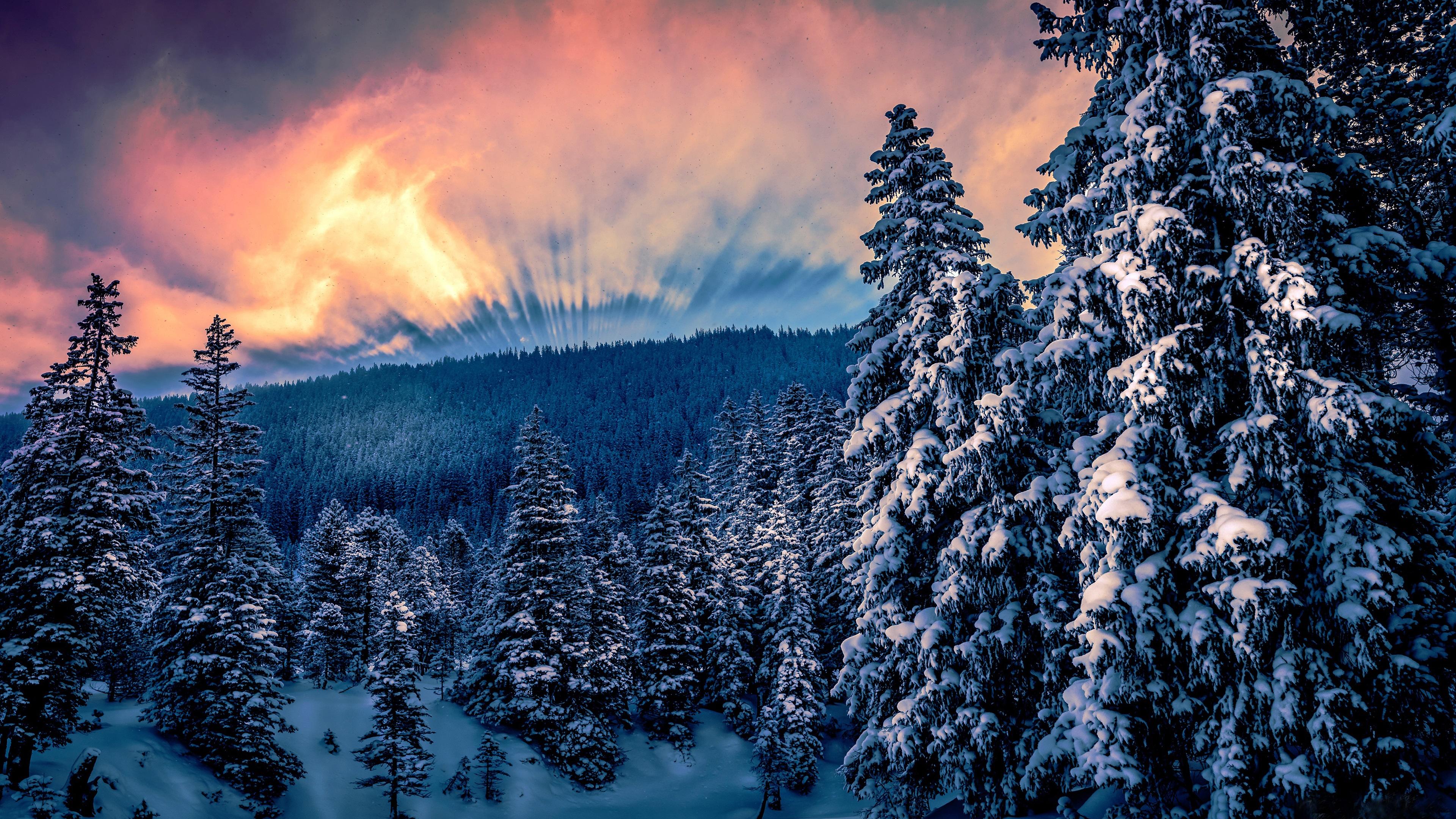 природа лес деревья ели гора облака небо  № 2757490 загрузить