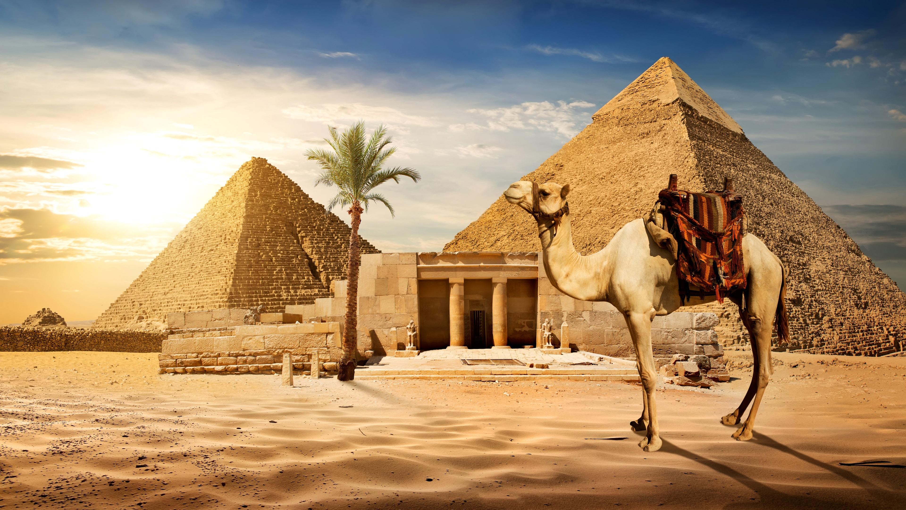 Fonds D Ecran Le Caire Pyramide Chameau Sables Palmier Soleil Egypte 3840x2160 Uhd 4k Image