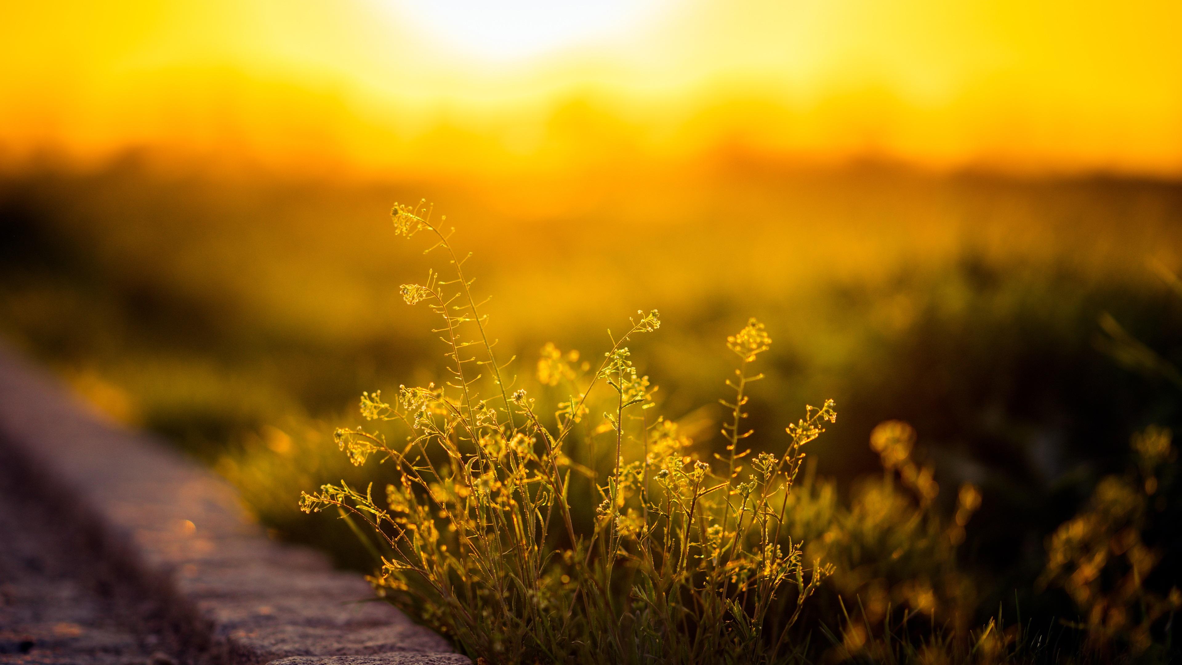 соллнечные очки трава природа онлайн
