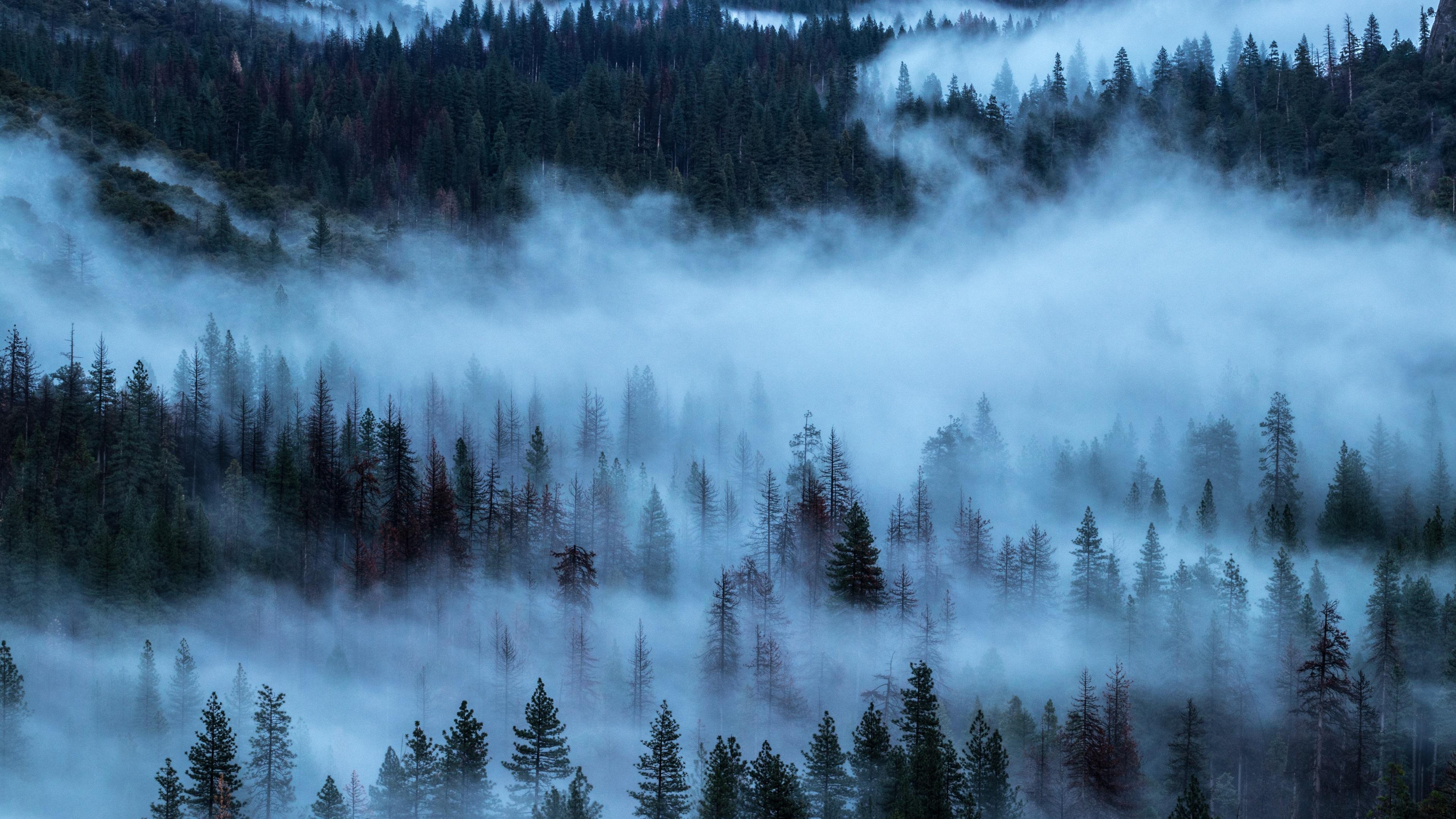 Download Wallpaper 3840x2160 Trees Forest Fog Uhd 4k