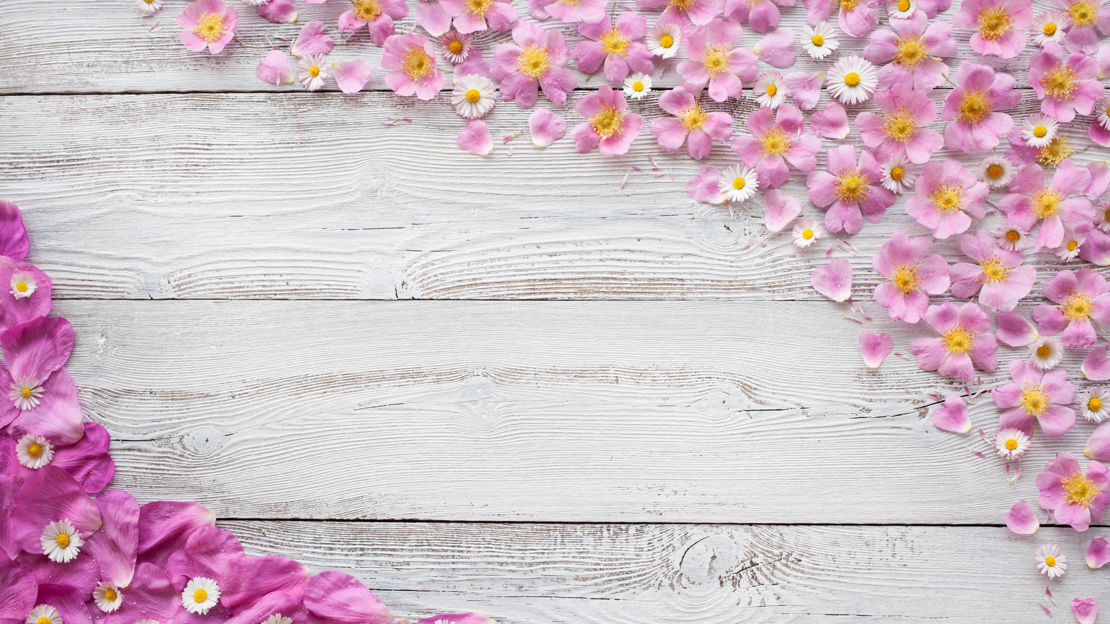 Fondos De Pantalla Fondo De Tablero De Madera De Colores: Fondos De Pantalla Flores, Pétalos De Rosa, Gotas De Agua