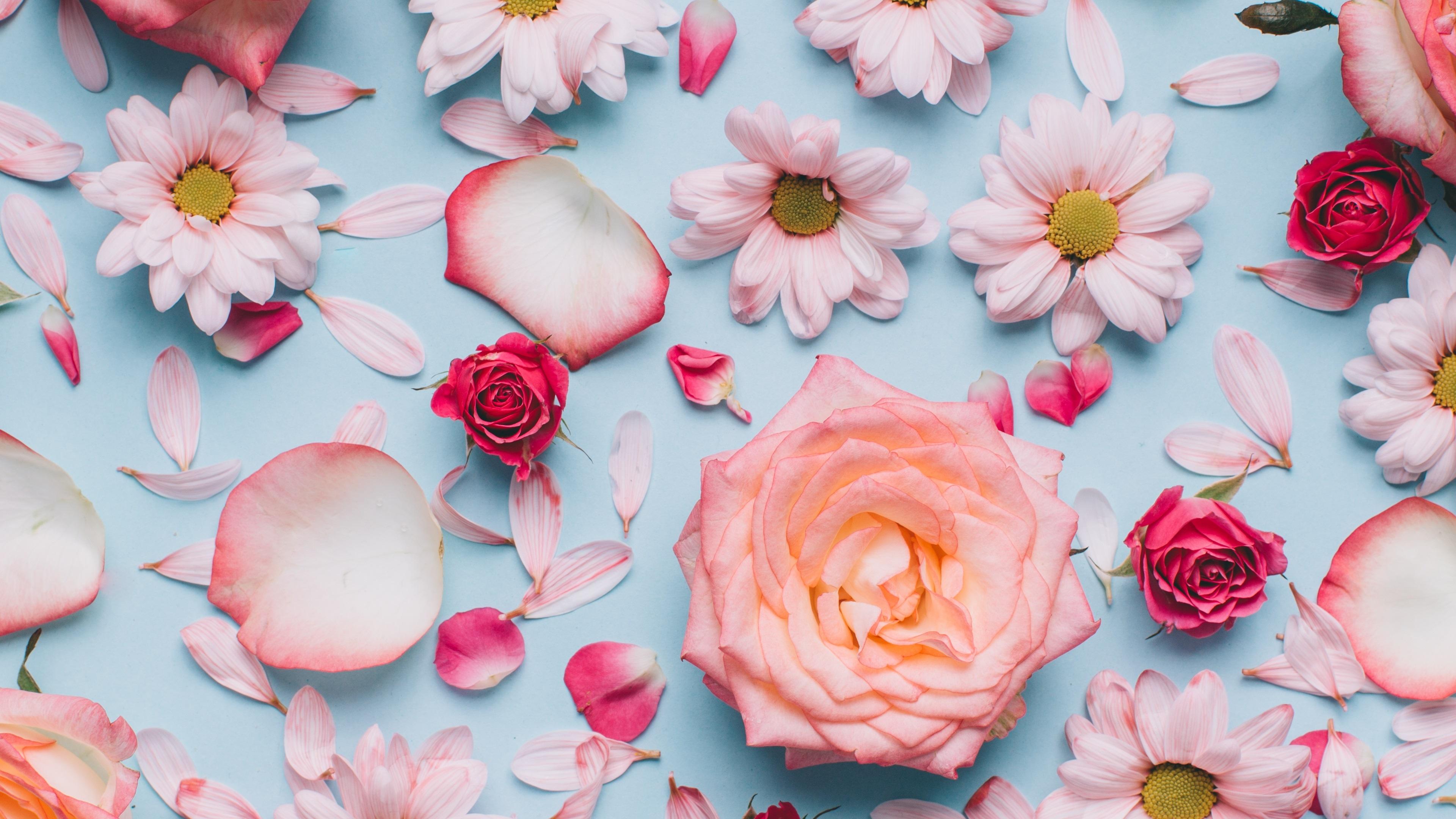 Обои картинки лепестки цветы
