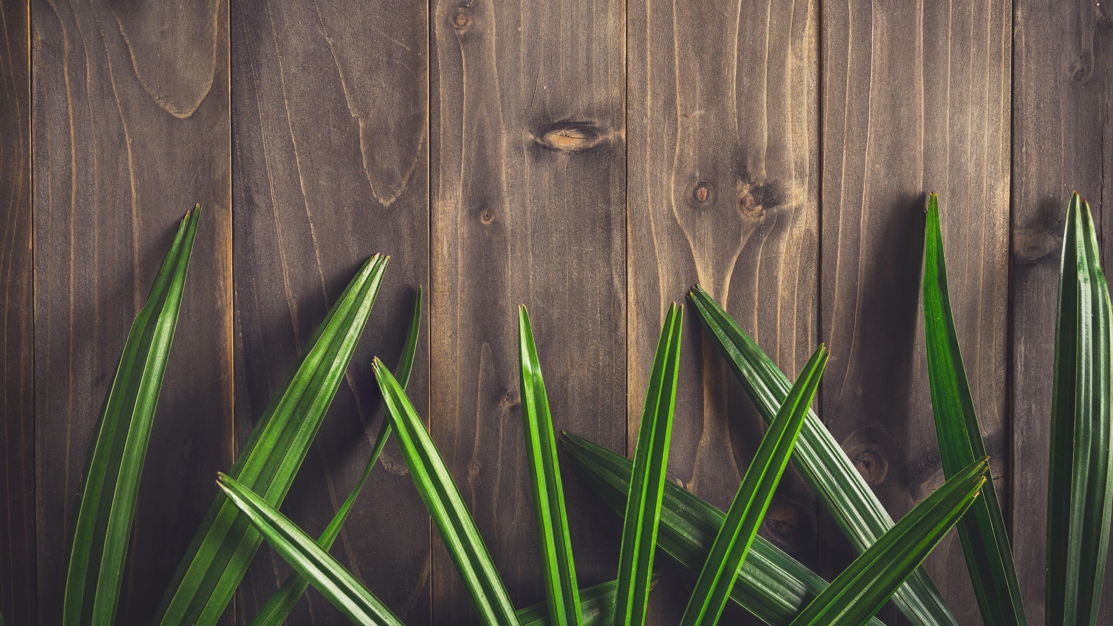 Fondos De Pantalla Fondo De Tablero De Madera De Colores: Fondos De Pantalla Hojas De Color Verde, Textura, Fondo De