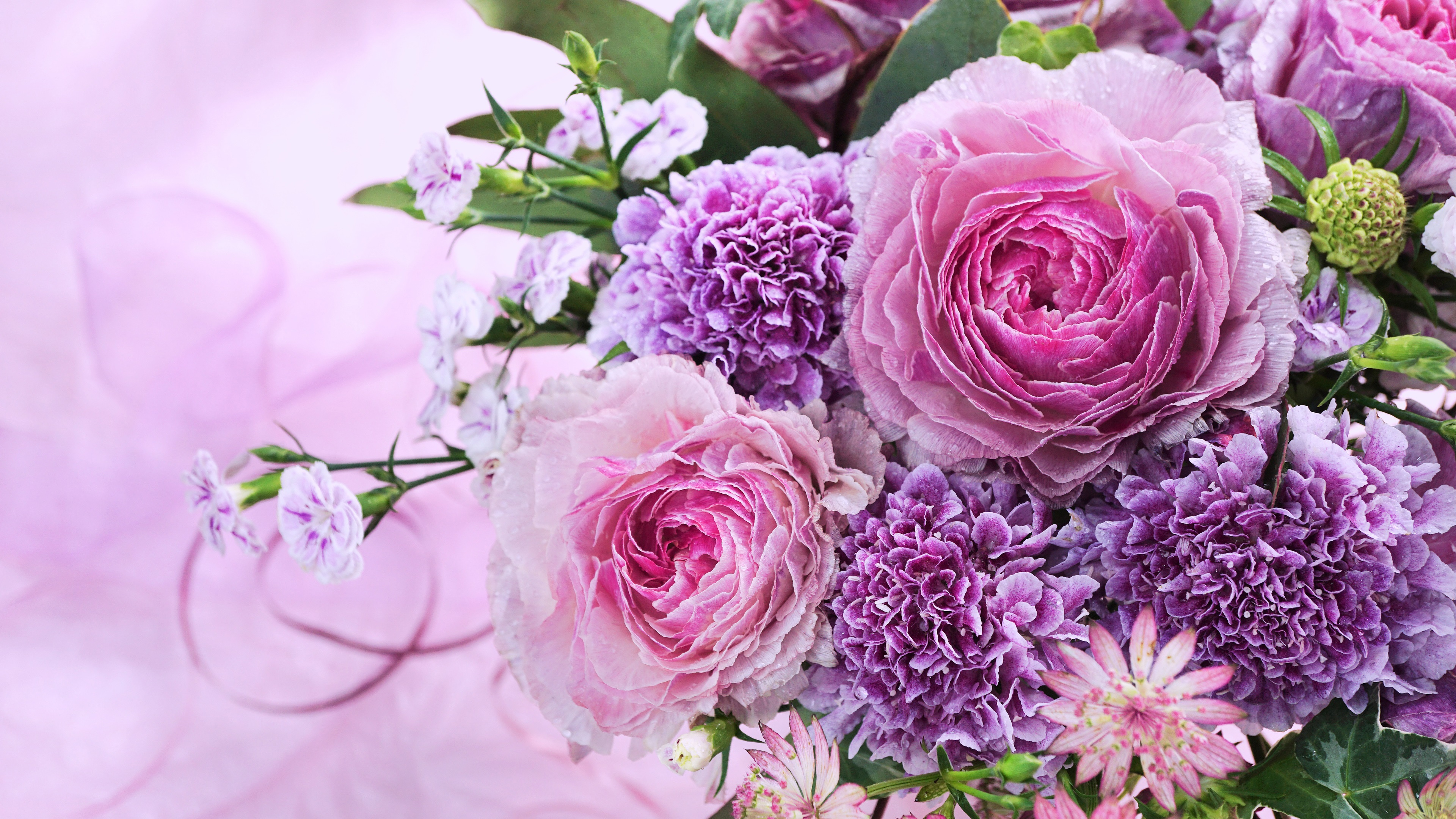 Fondos De Pantalla Flores Rosadas Crisantemo Fondo